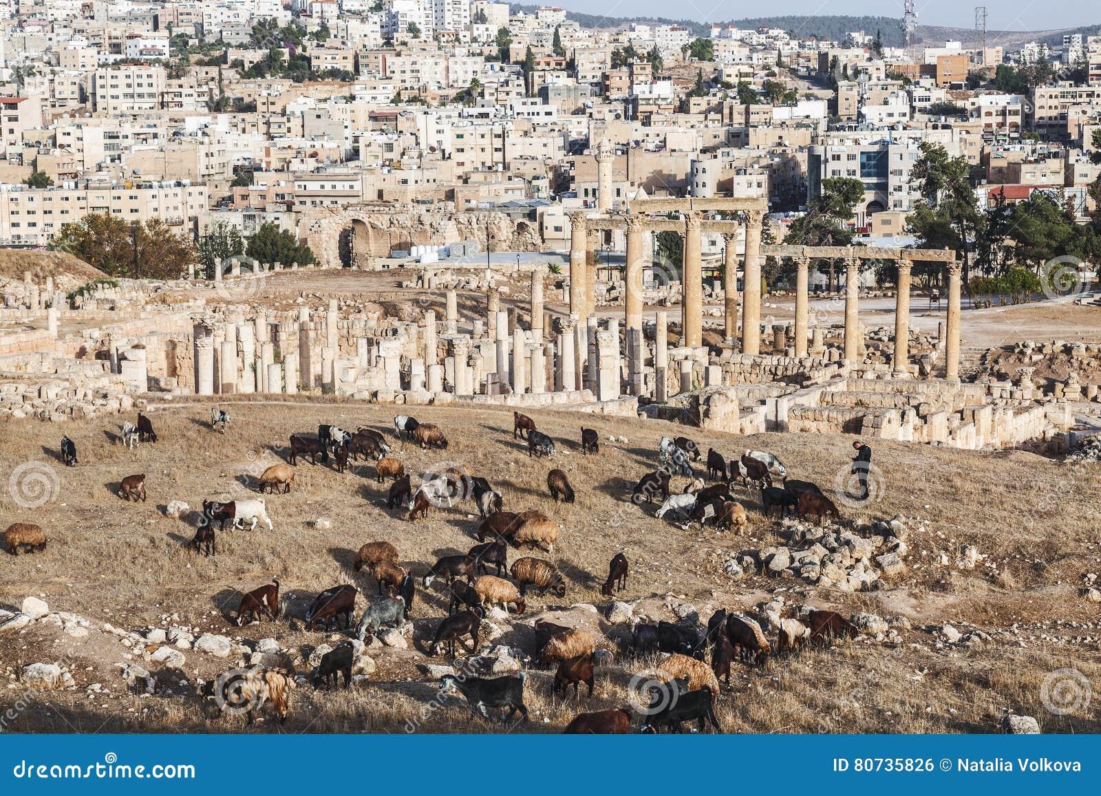 Mening van de Roman ruïnes in de Jordanian stad van Jerash Gerasa van Antiquiteit met kuddeschapen in de voorgrond
