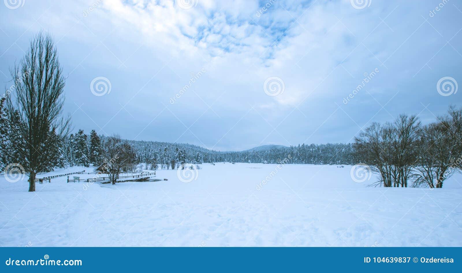 Download Mening Van De Winter Bevroren Meer Met Pijnboombos Stock Afbeelding - Afbeelding bestaande uit landschap, december: 104639837