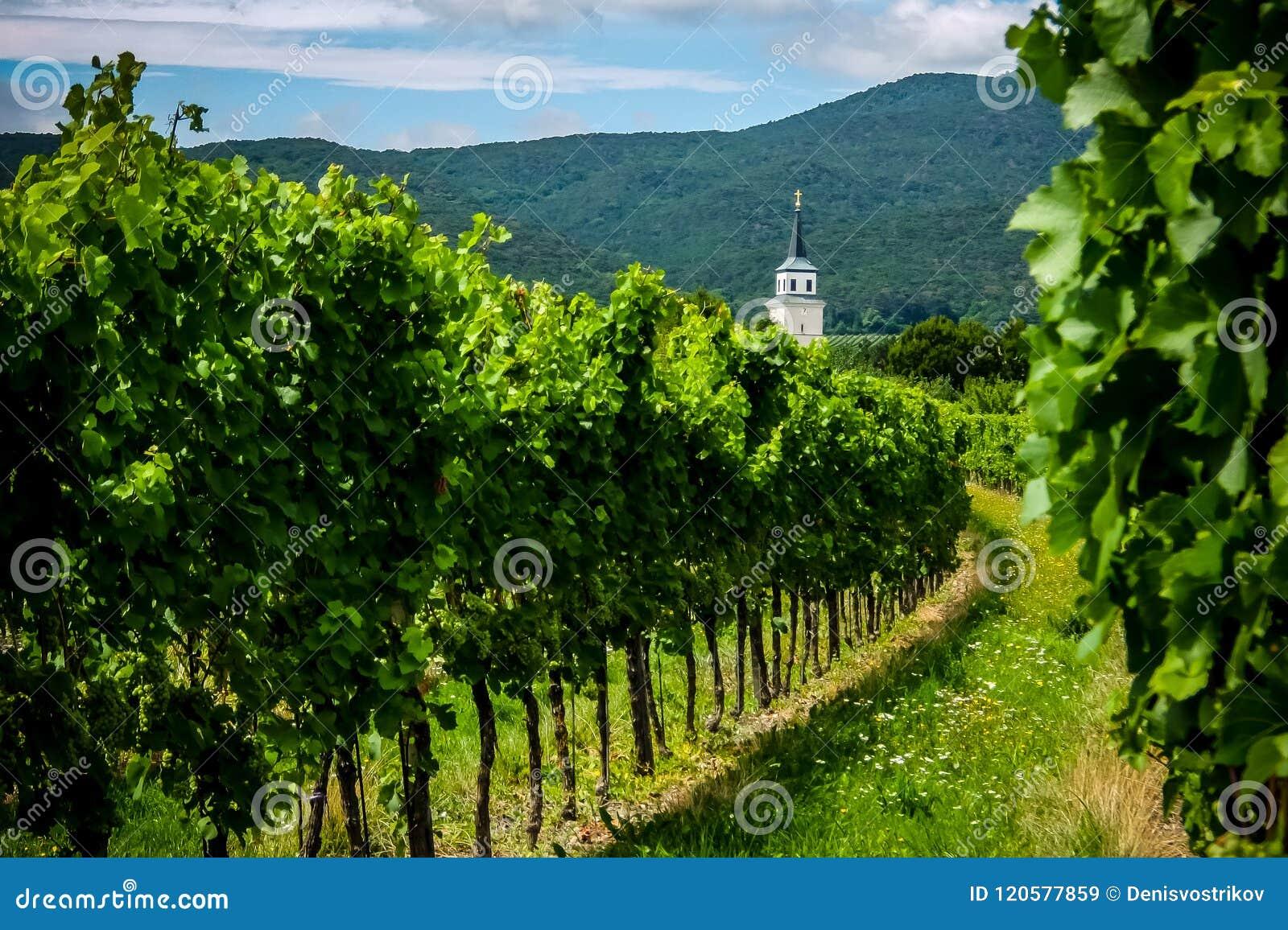 Mening van wijngaarden en St Anna Catholic Church dichtbij Soos Sooss