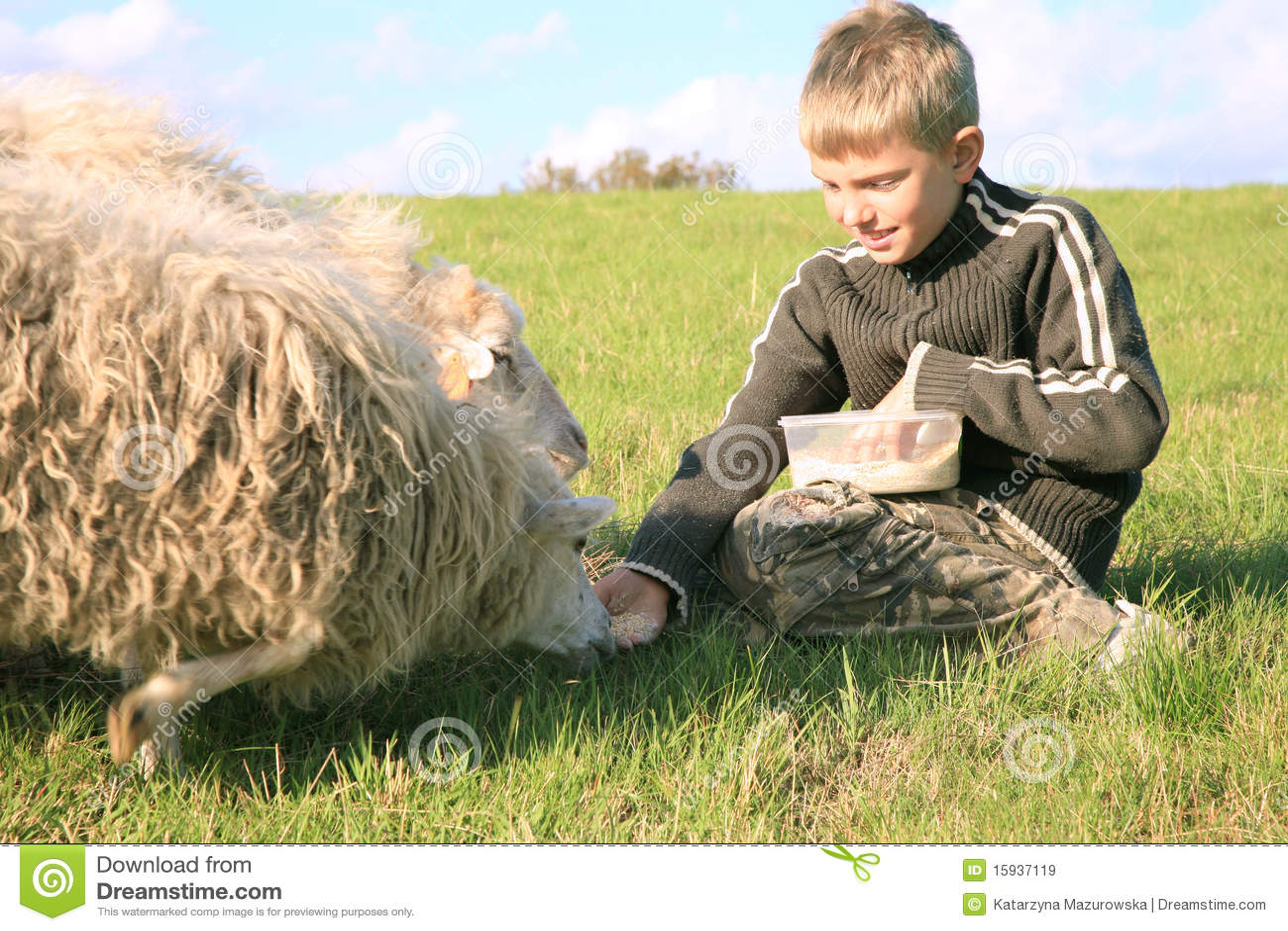 Menino e sheeps