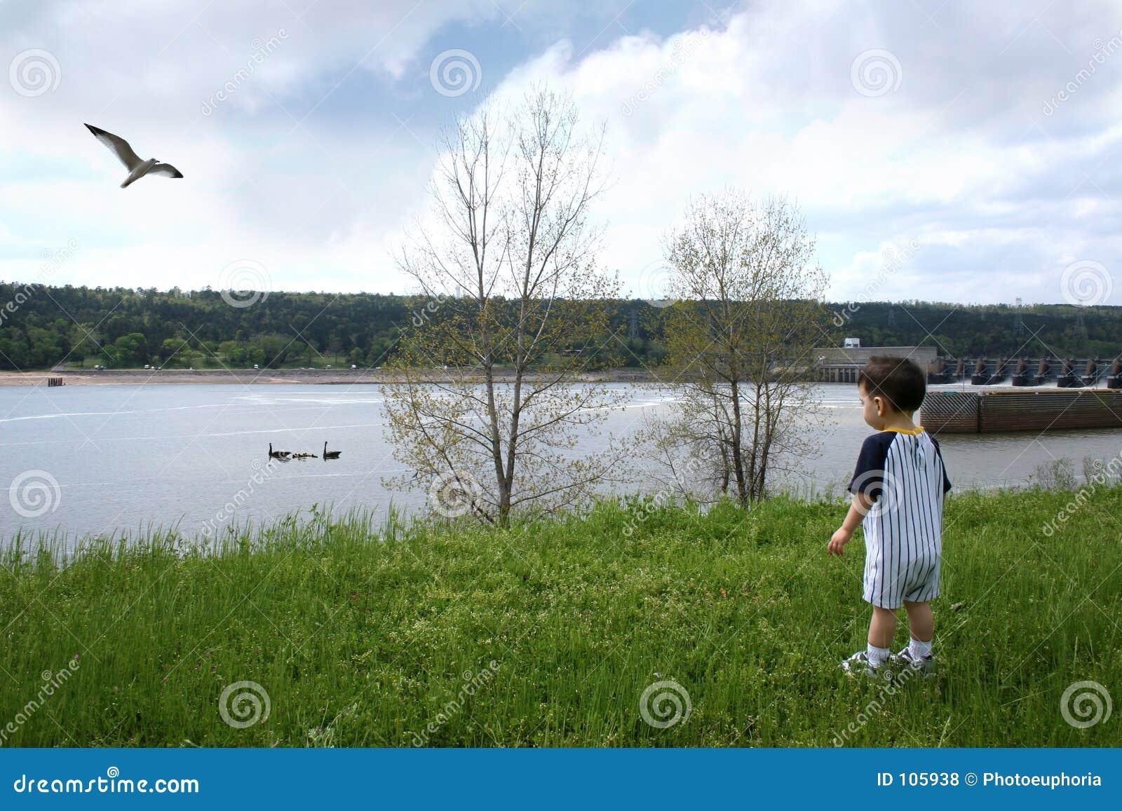 Menino na nadada de observação dos gansos do parque perto