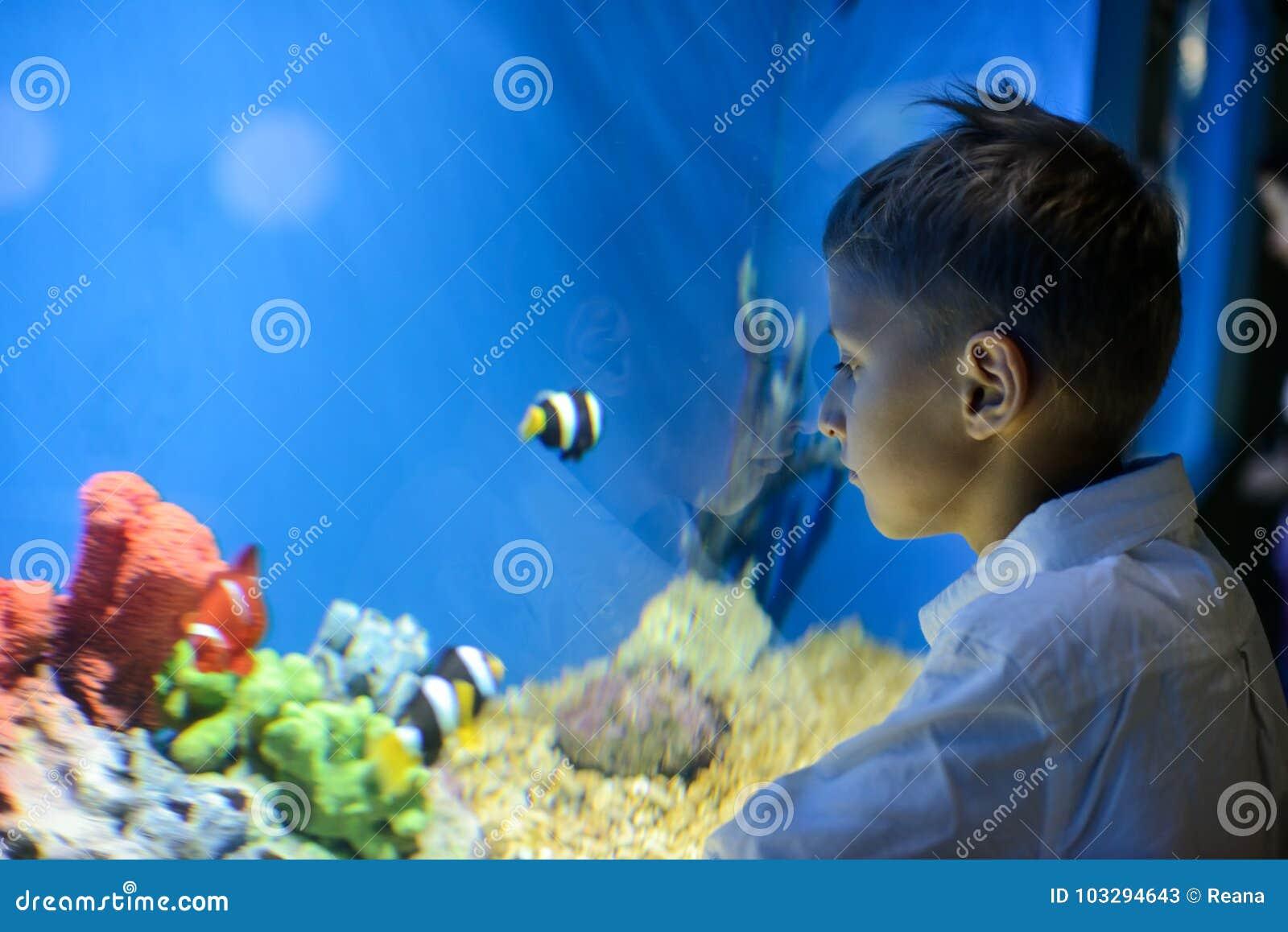 Menino que olha no aquário