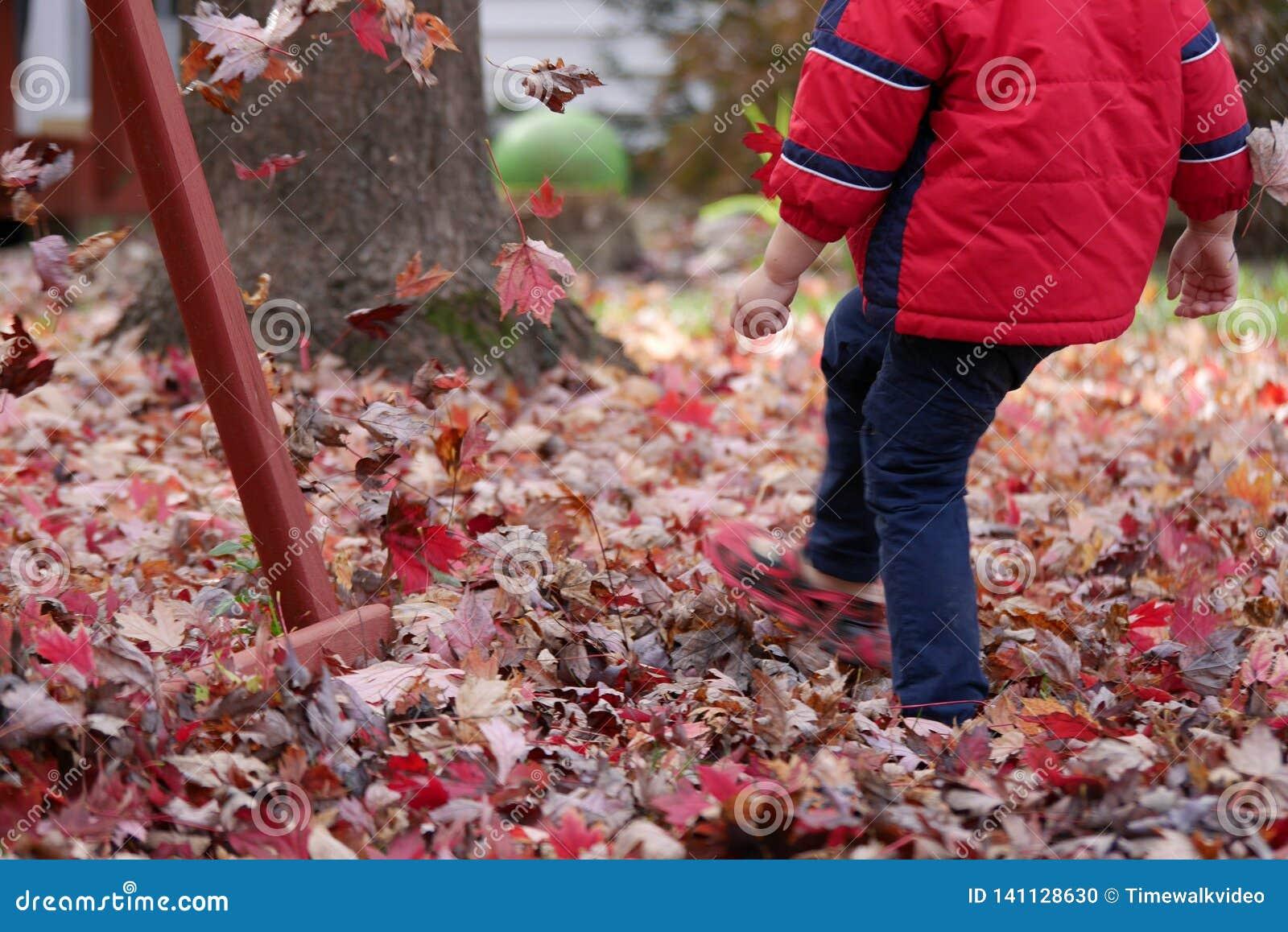 Menino que retrocede as folhas vermelhas no outono
