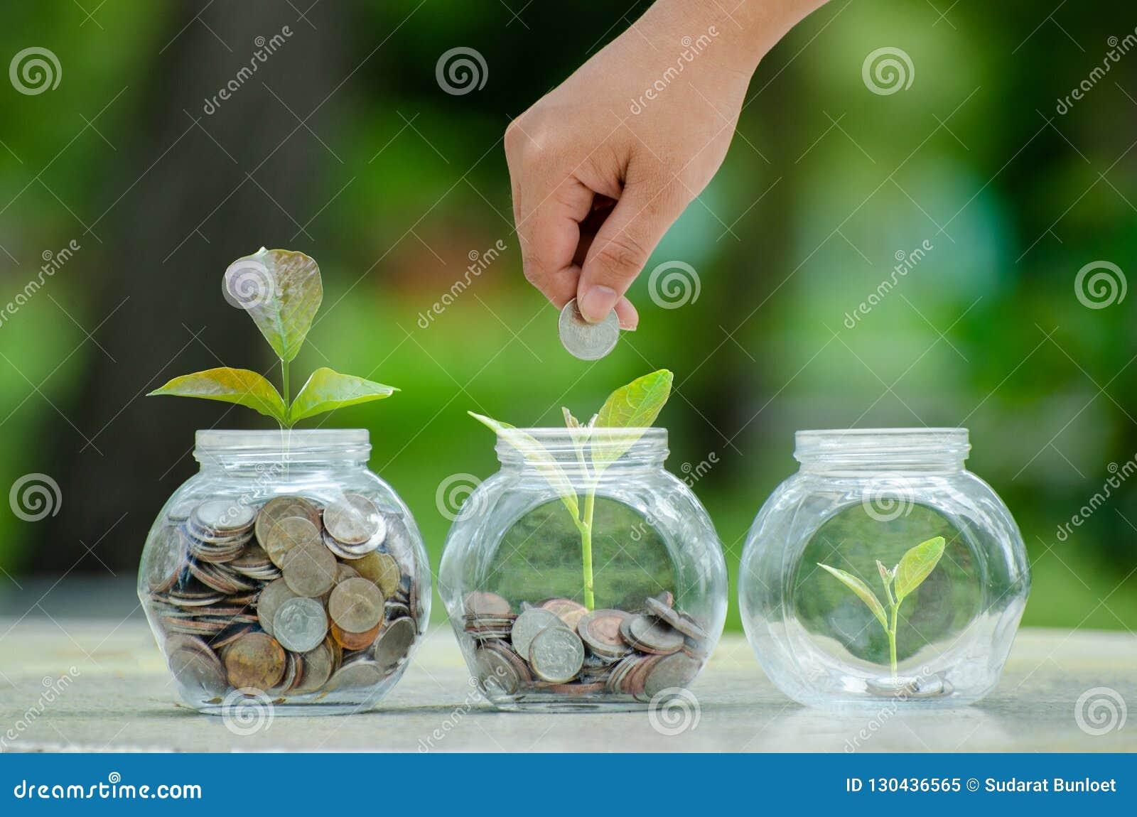 Menniczy drzewny Szklany słój rośliny dorośnięcie od monet na zewnątrz szklanego słoju pieniądze inwestycji i oszczędzania pienię