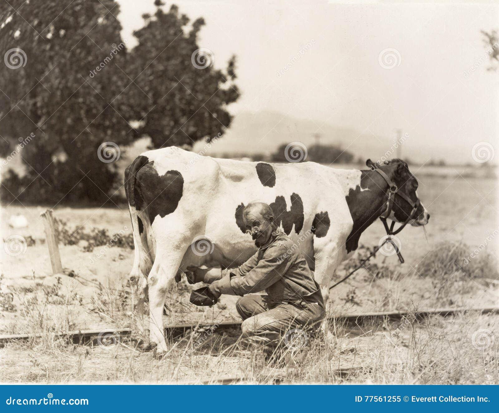 Mens het melken koe op gebied