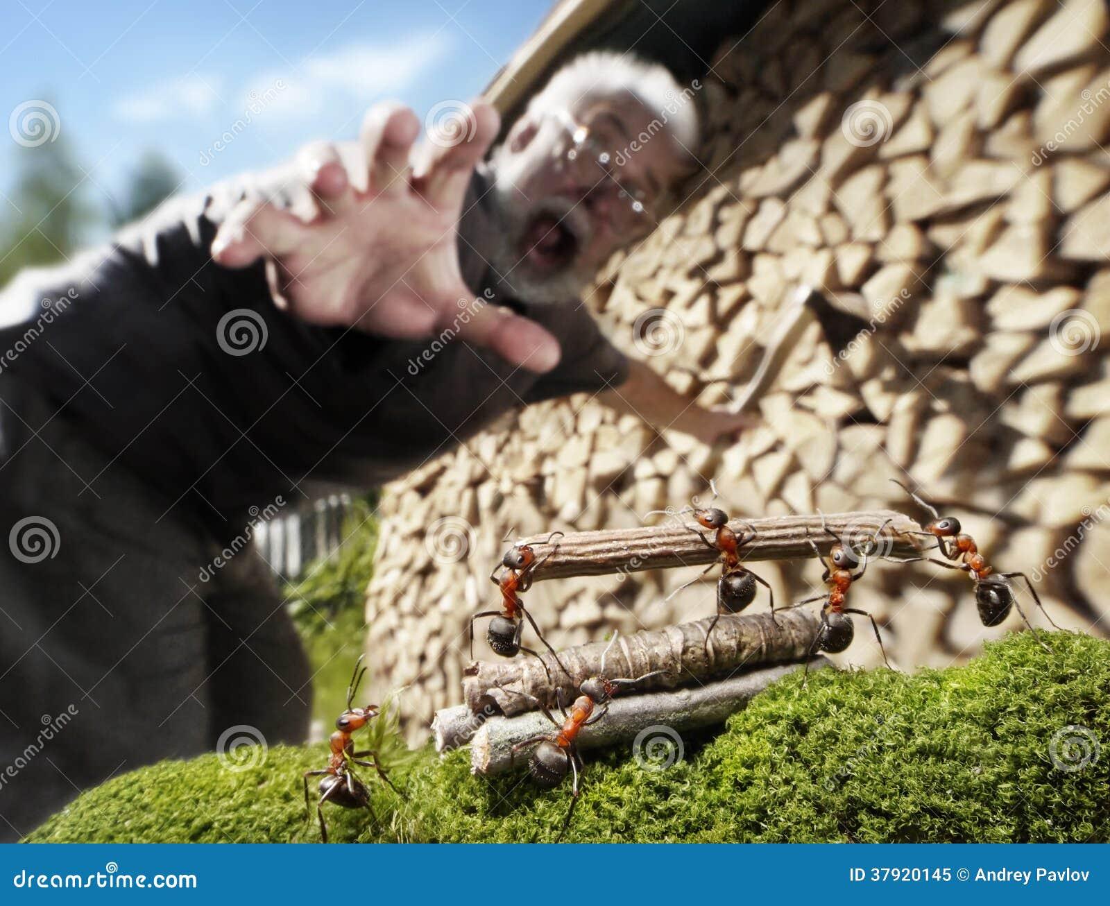 Mens, mieren en brandhout, diefstal of hulp