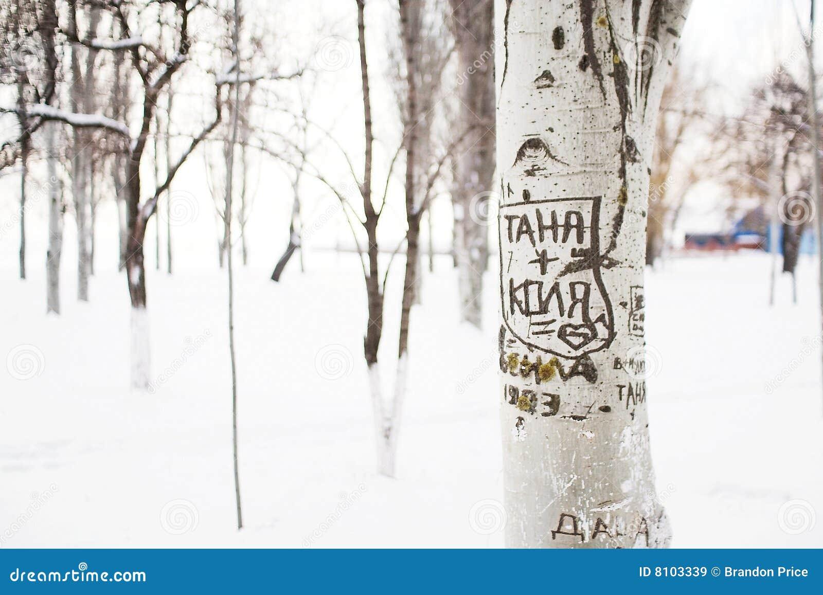 Mensaje romántico en árbol