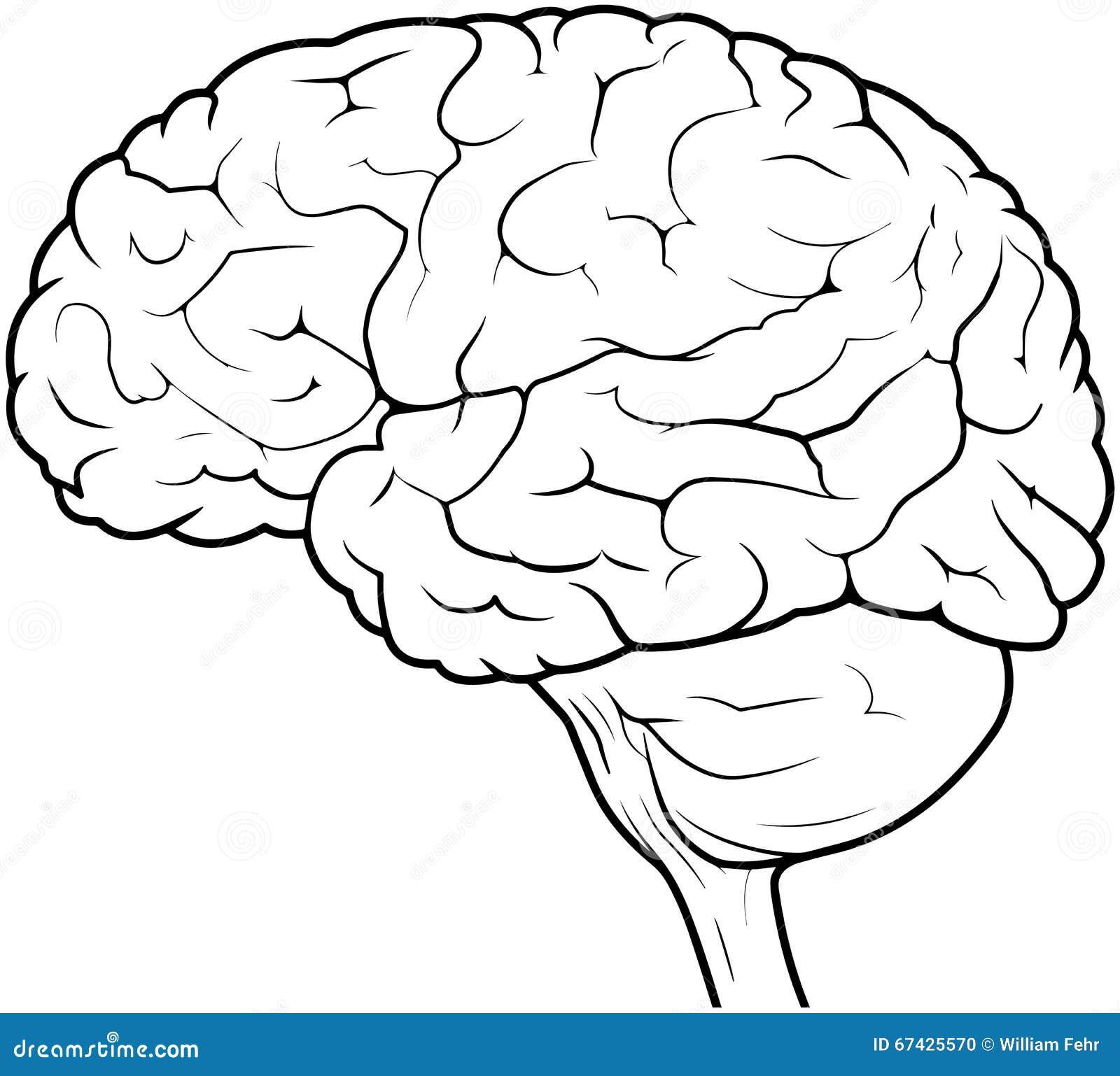 Mensch Brain Drawing stock abbildung. Illustration von ...