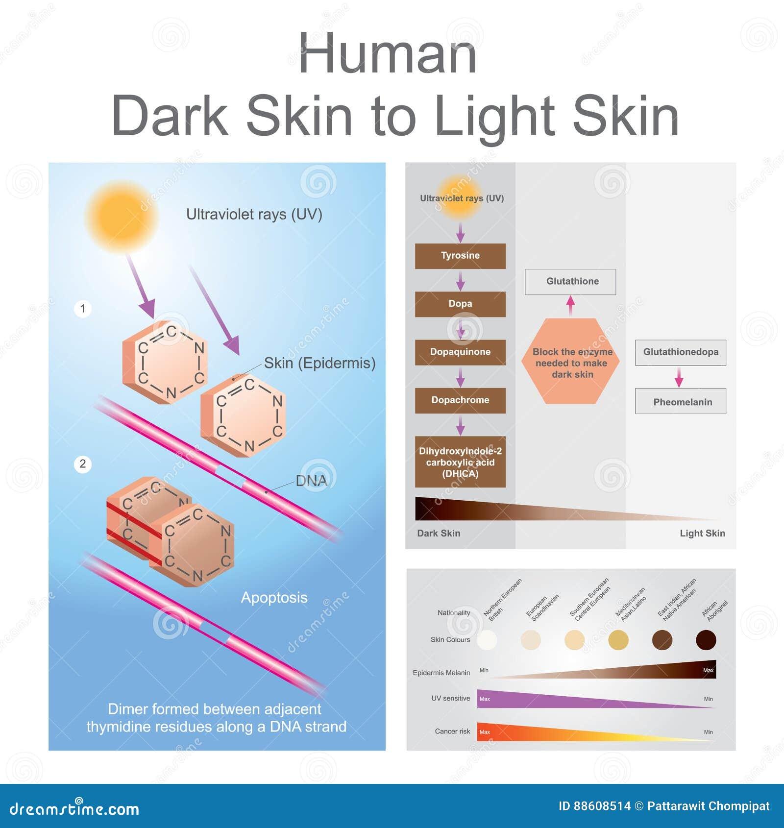 Menschliche dunkle Haut, zum des Hautprozesses zu beleuchten