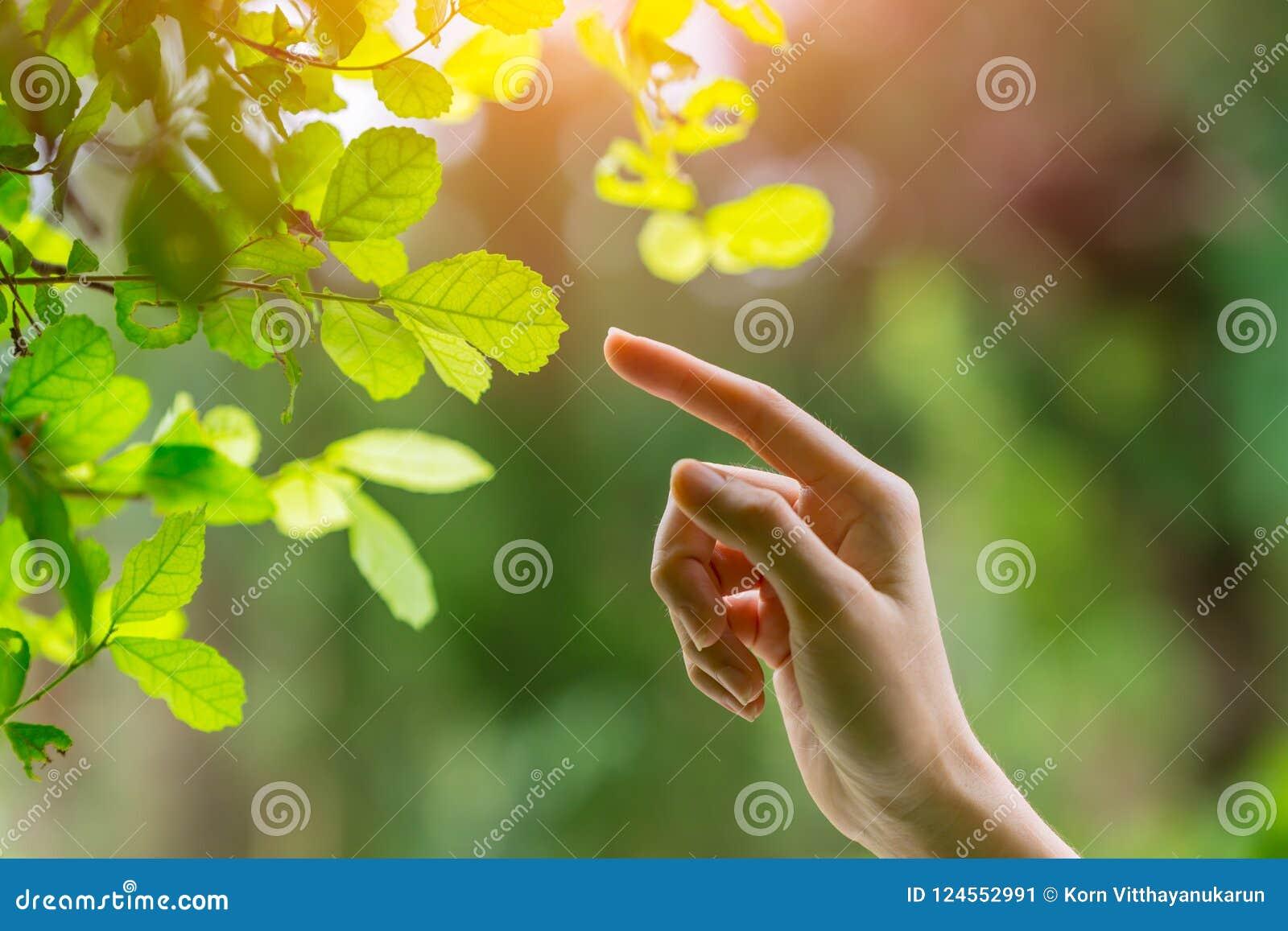 Menschliche Hand, die Finger auf Naturgrünblatt zeigend sich berührt
