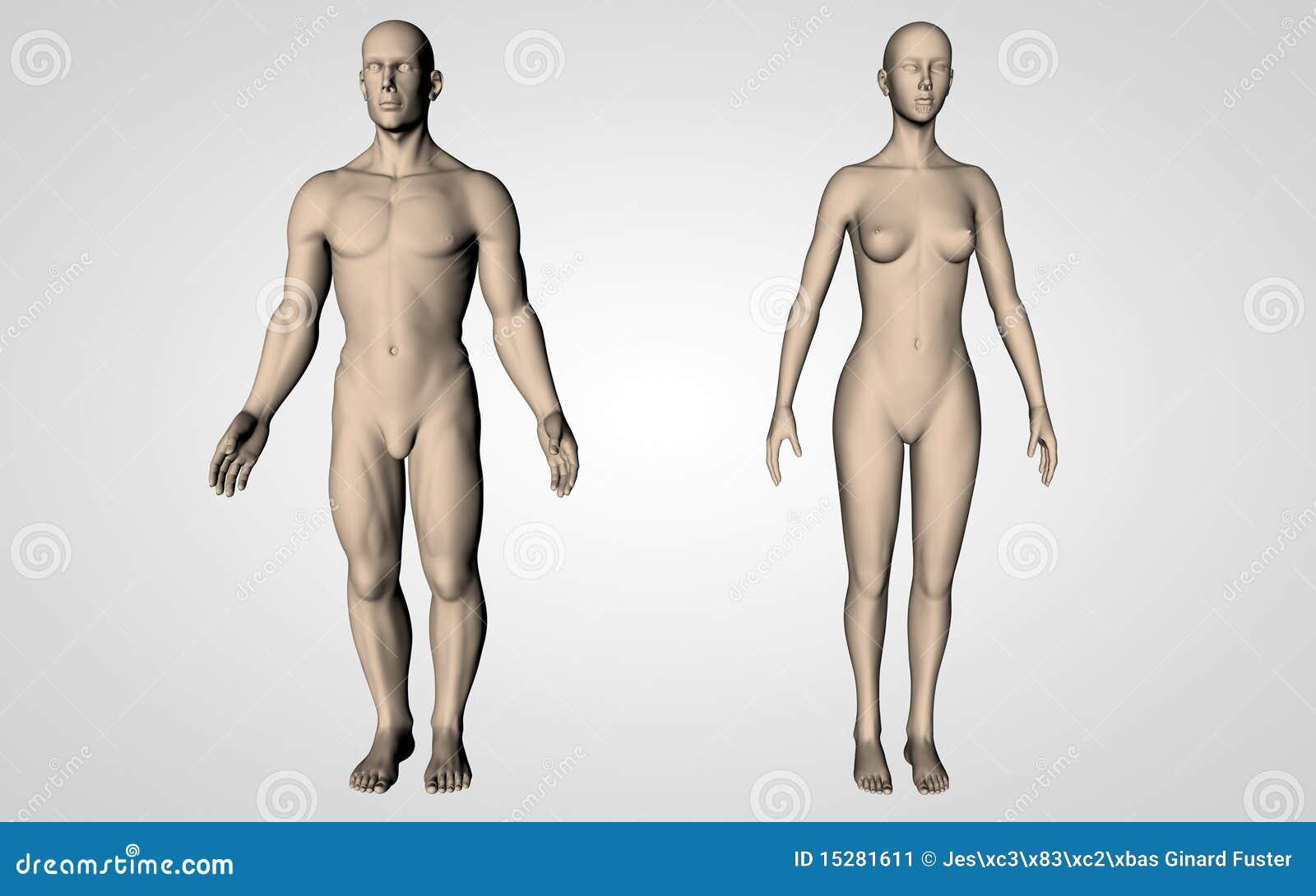 Menschliche Nullkörper
