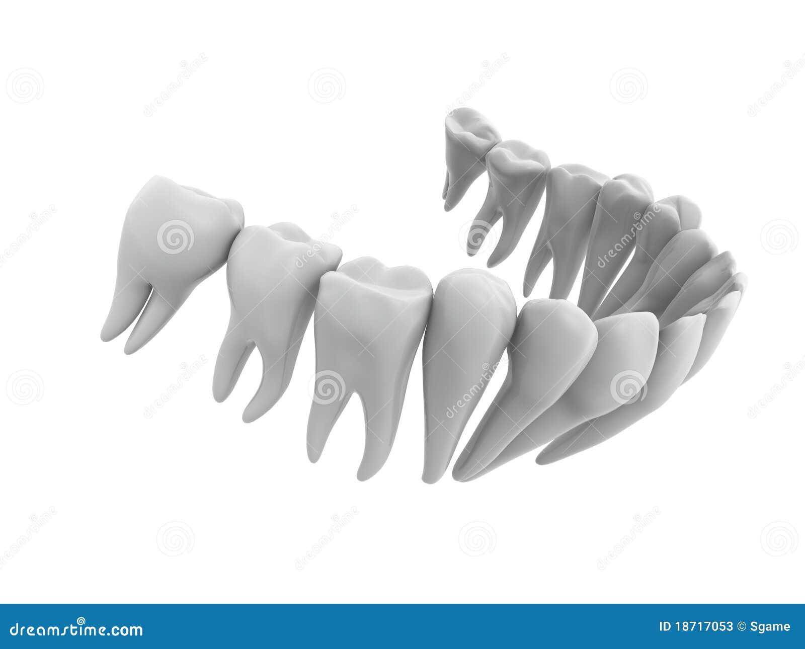 Menschliche Zähne stock abbildung. Illustration von obacht - 18717053