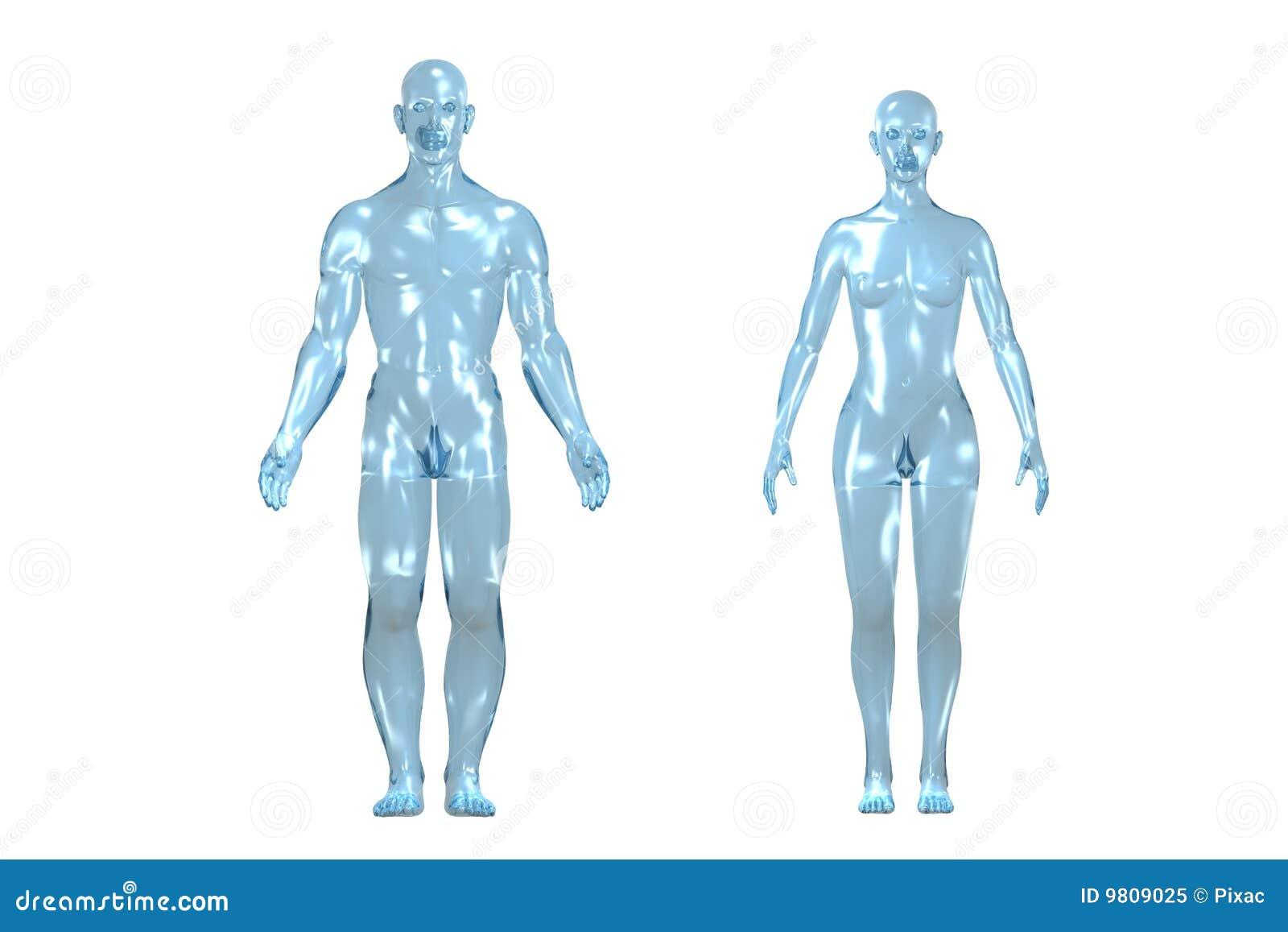 Menschlicher Körper 3D stock abbildung. Illustration von kopf - 9809025