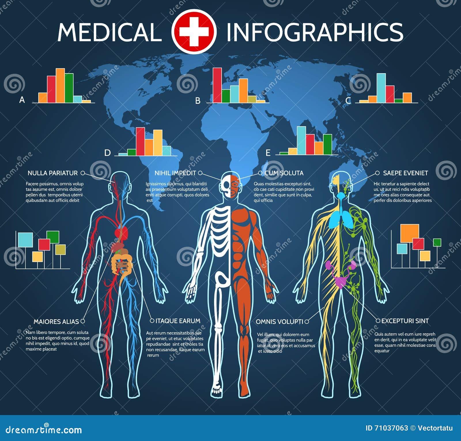 Menschlicher Körper-Anatomie Infographic Vektor Abbildung ...