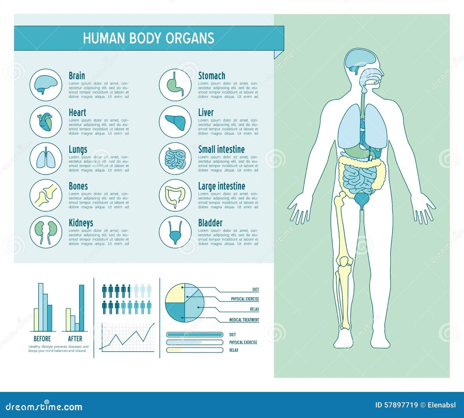 Menschlicher Körper Infographics Vektor Abbildung - Illustration von ...