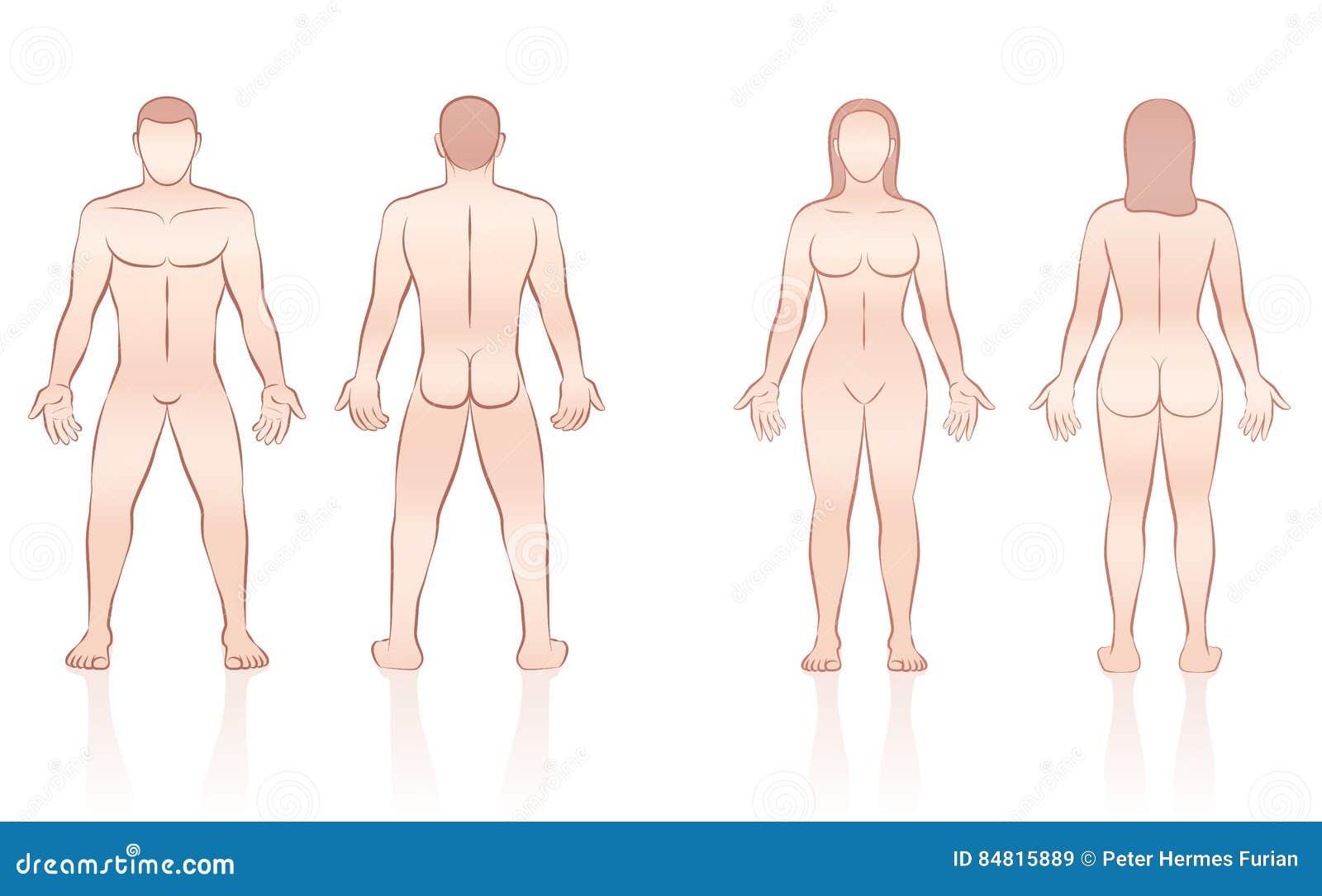 Menschlicher Körper-Mann-Frau Front Back Vektor Abbildung ...