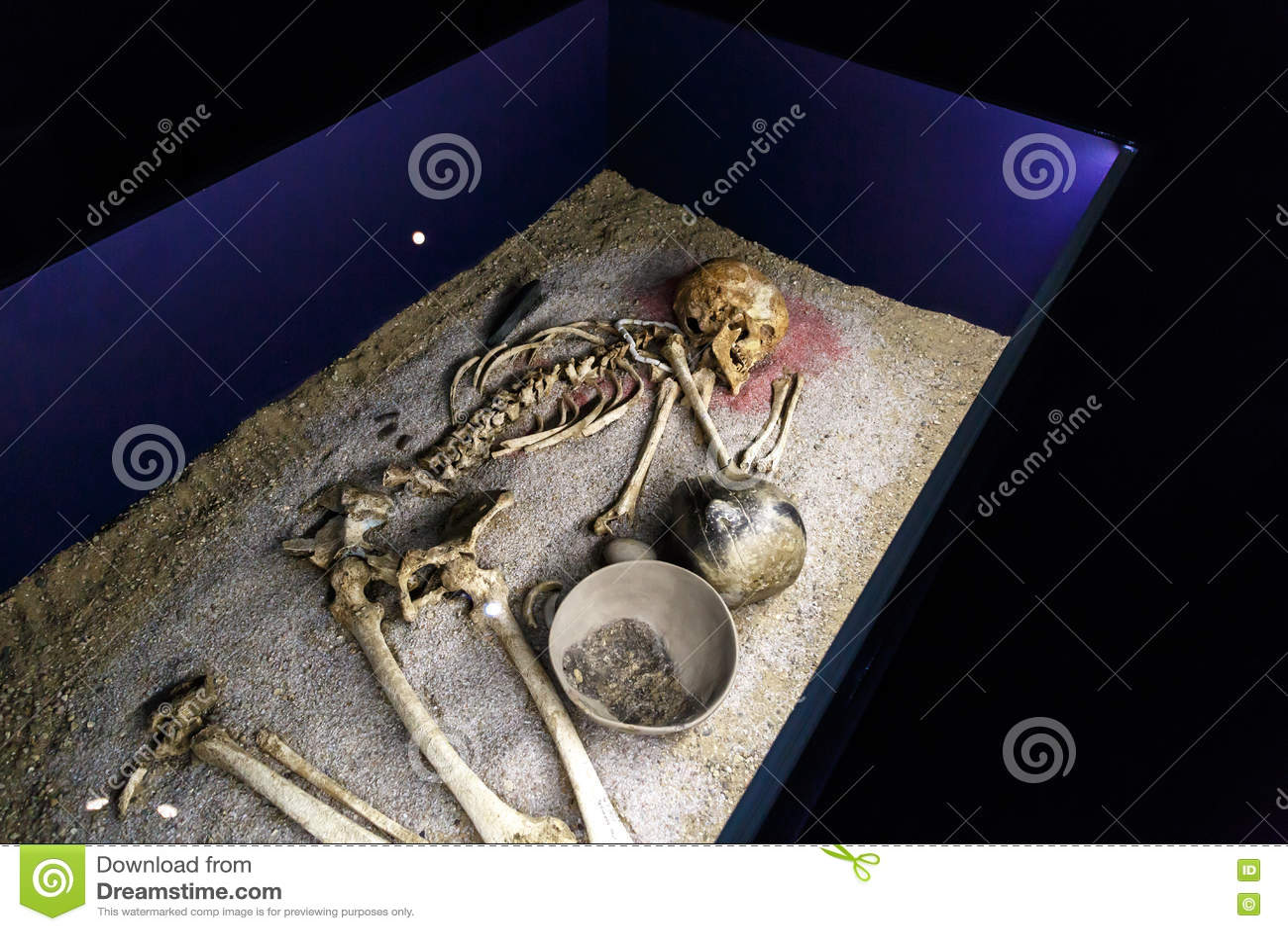 Menschlicher Körper-Skelett Redaktionelles Bild - Bild von museum ...