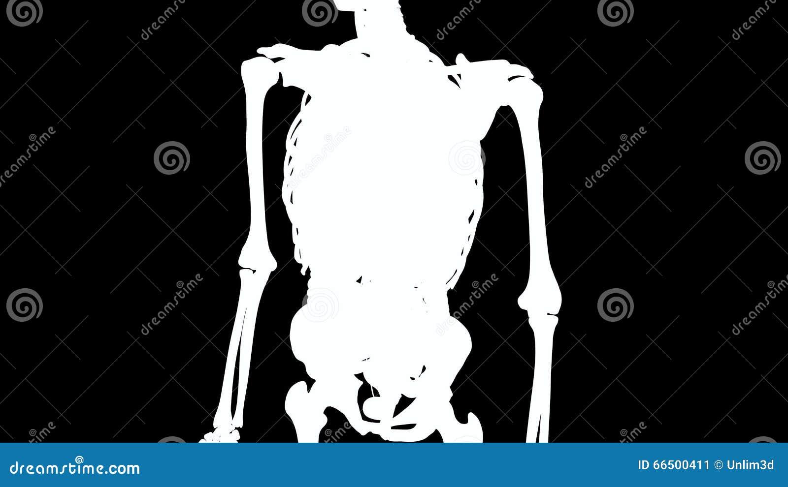 Erfreut Bild Der Inneren Organe Im Menschlichen Körper Ideen ...