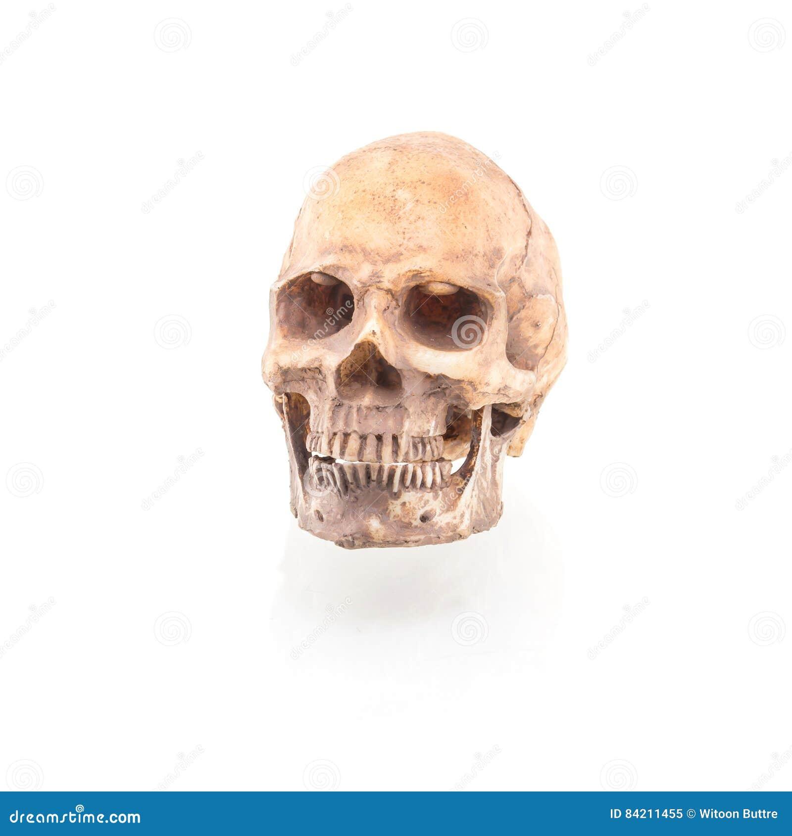 Menschlicher Schädel auf lokalisiert