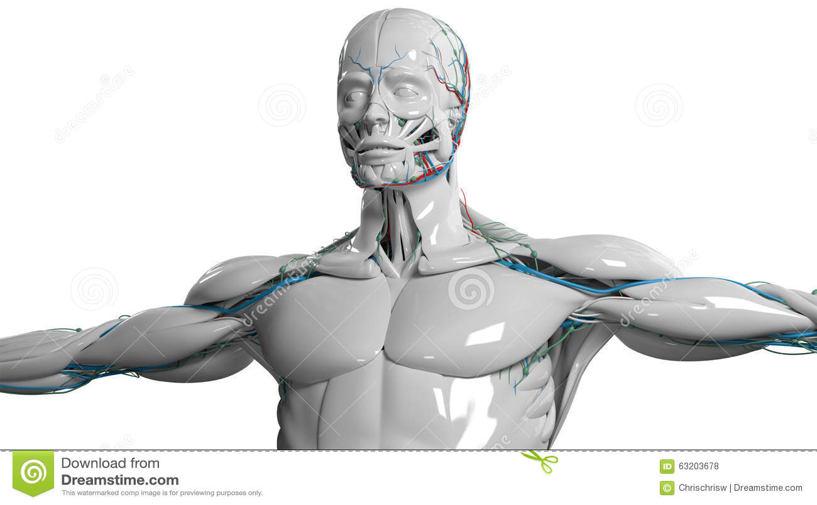 Menschliches Anatomiegesicht und -Torso im Porzellan beenden auf einfachem weißem Hintergrund