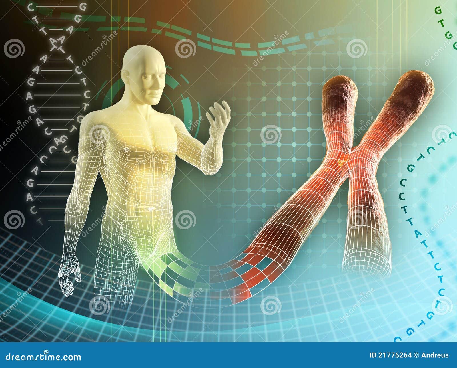 Menschliches Chromosom