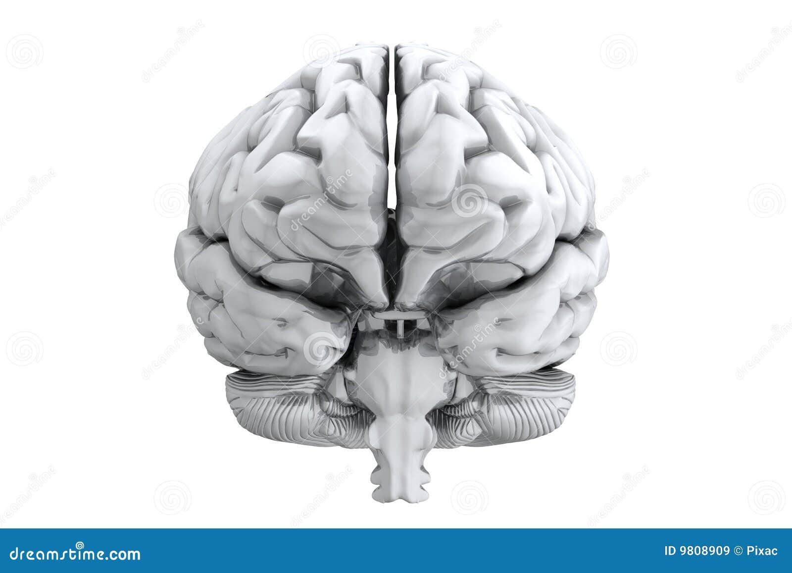 Menschliches Gehirn stock abbildung. Illustration von kopf - 9808909