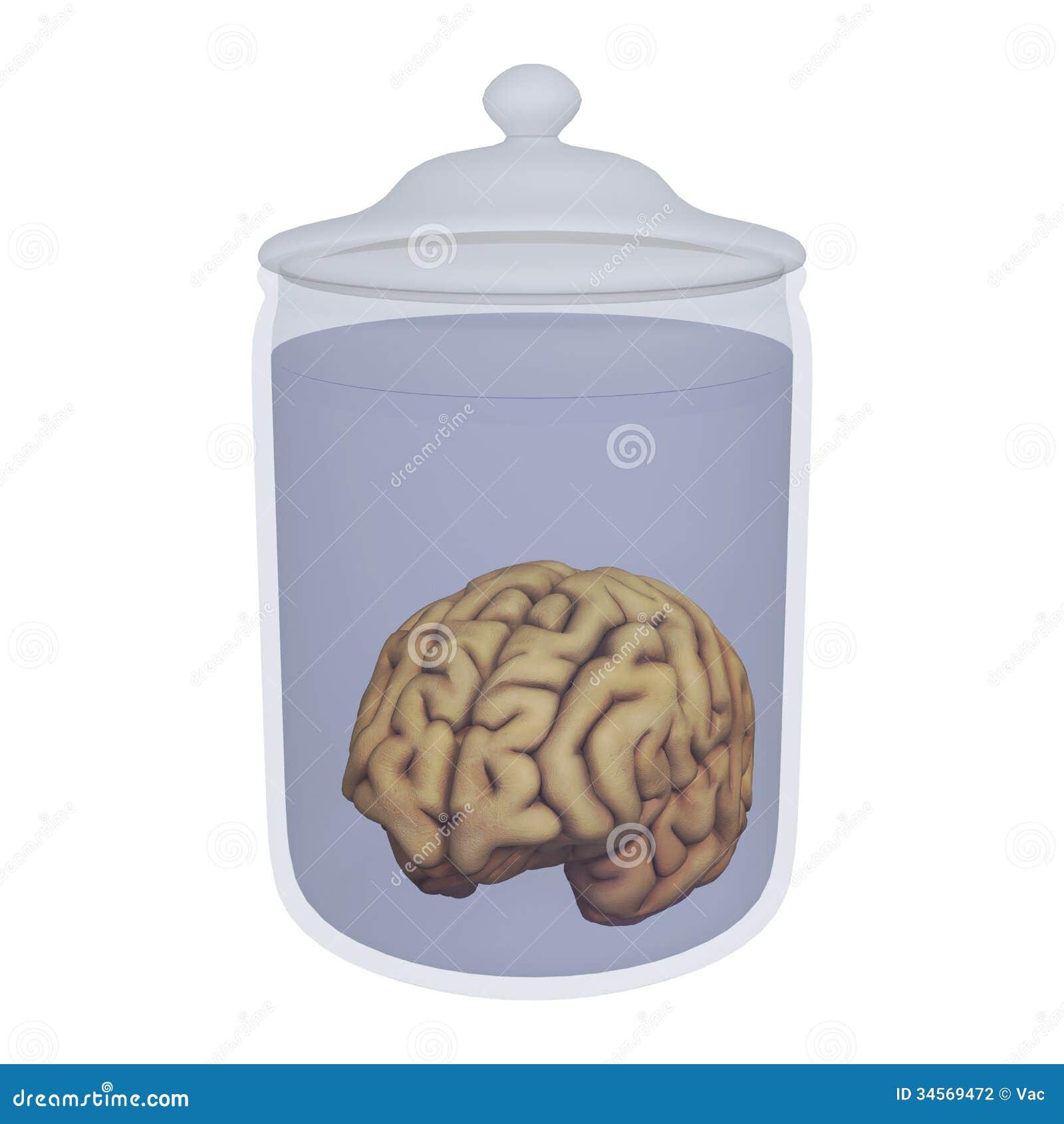 Menschliches Gehirn In Einem Glas Stock Abbildung - Illustration von ...