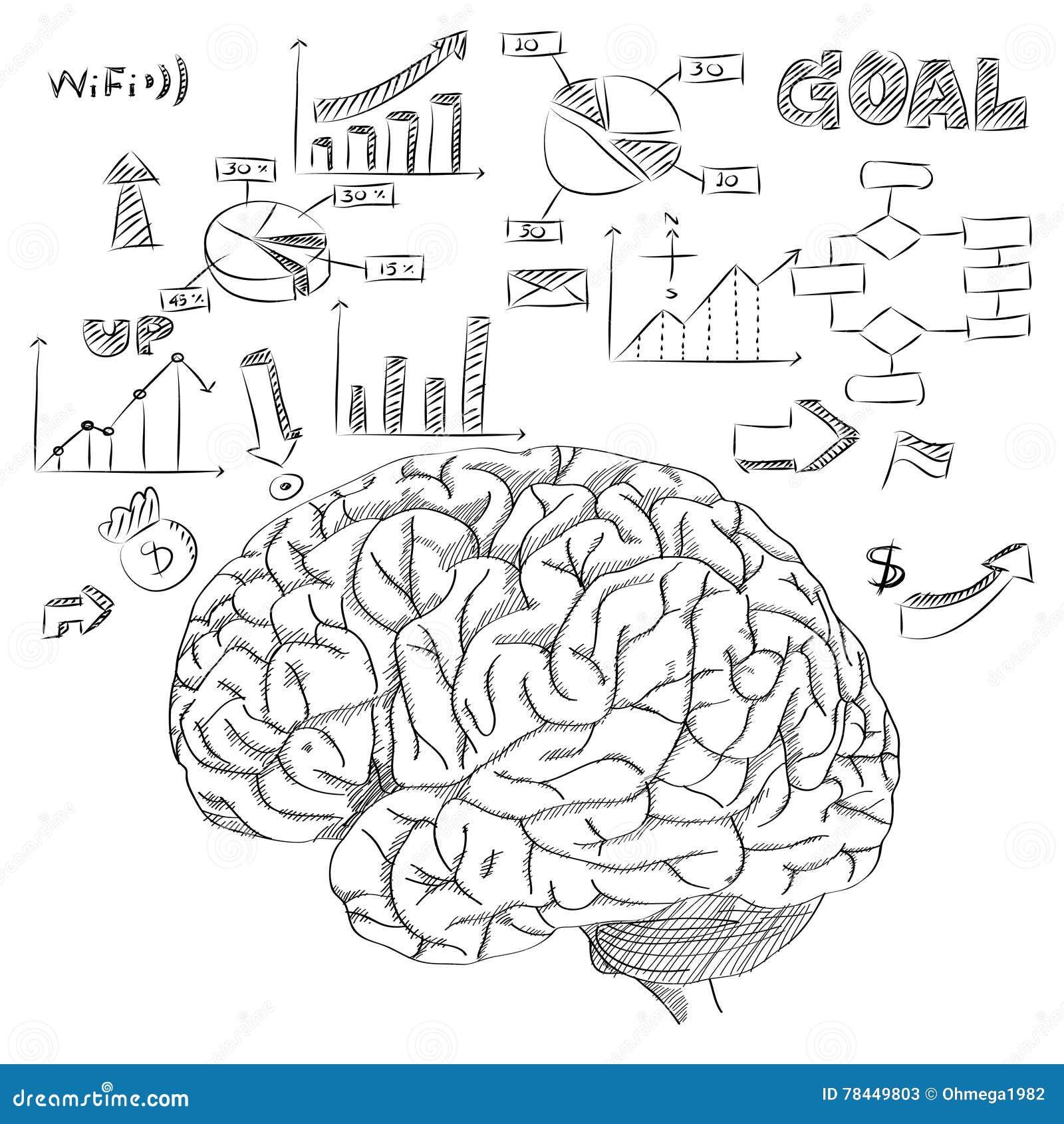 Nett Gehirnstrukturen Und Funktionen Diagramm Galerie - Menschliche ...