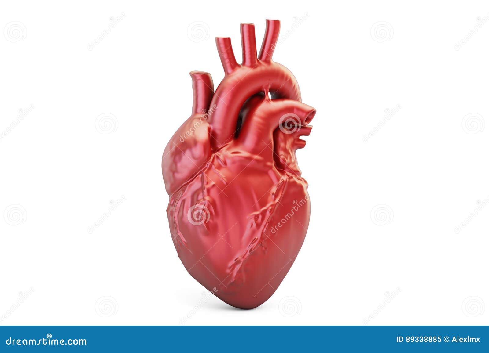 Menschliches Herz, Wiedergabe 3D Stock Abbildung - Illustration von ...