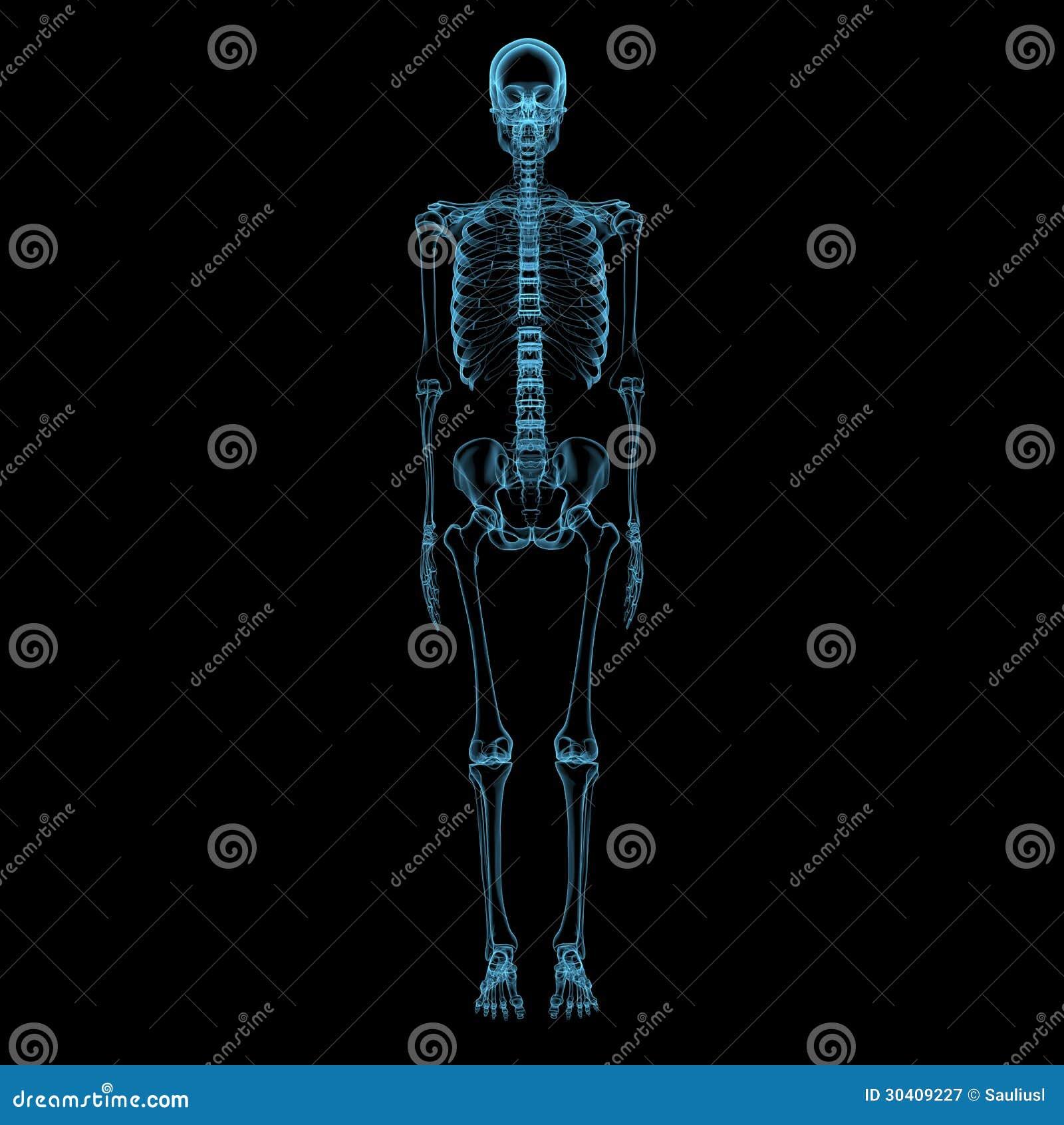 Menschliches Skelett (blaue transparente des Röntgenstrahls 3D)