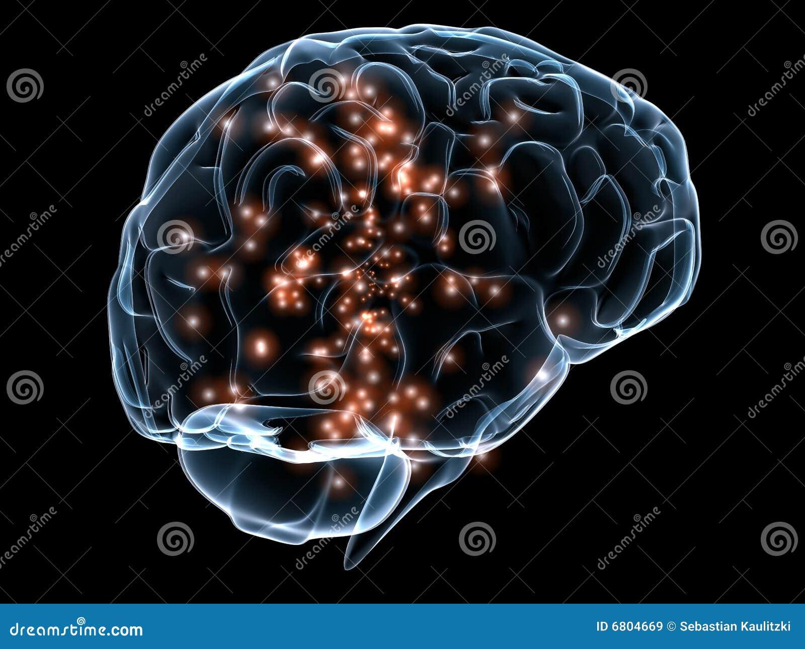 Menschliches transparentes Gehirn