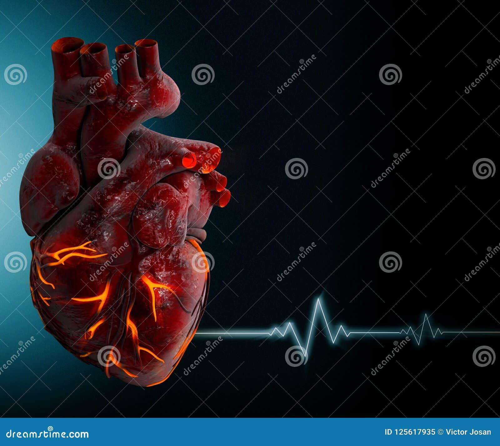 Menselijk Hart - Anatomie van Menselijke Hart 3d Illustratie