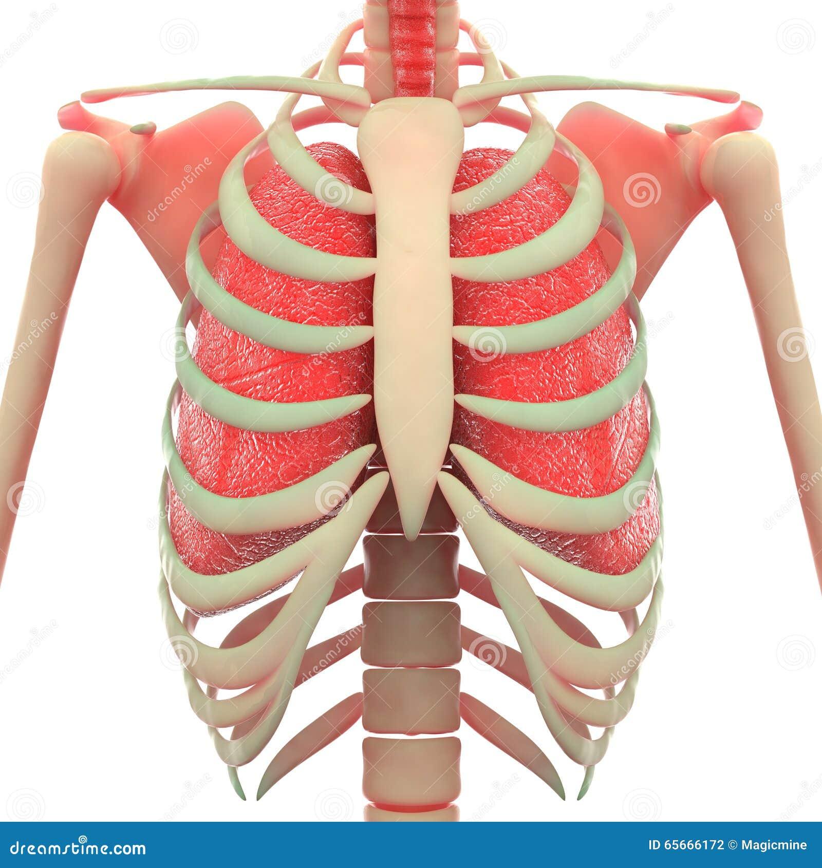 pijn in het borstbeen
