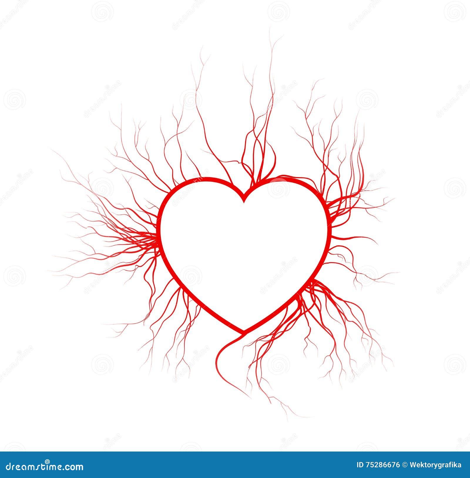 Menselijke aders met hart, rood de valentijnskaartontwerp van het liefdebloedvat Vector illustratie die op witte achtergrond word