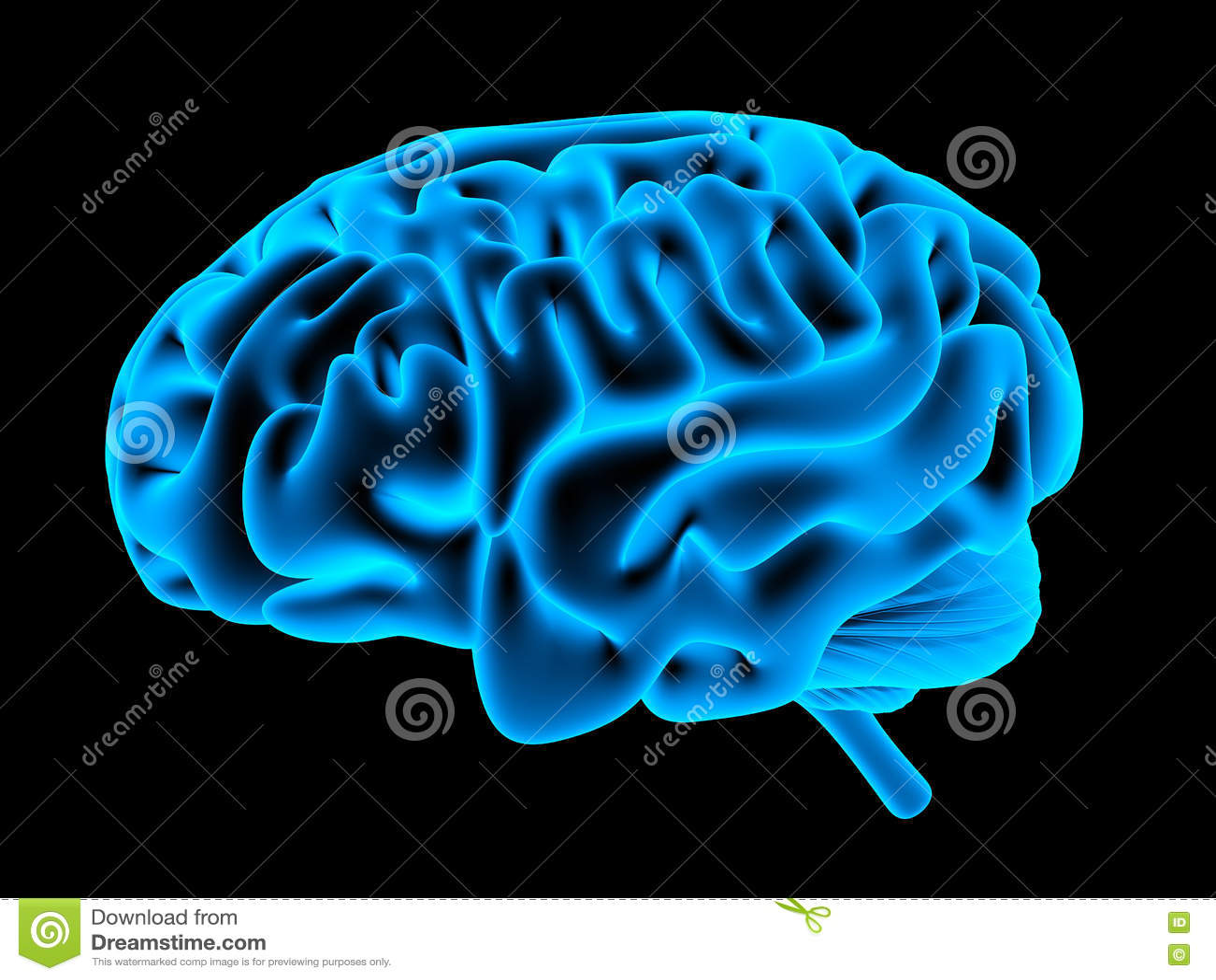 Menselijke hersenenröntgenstraal