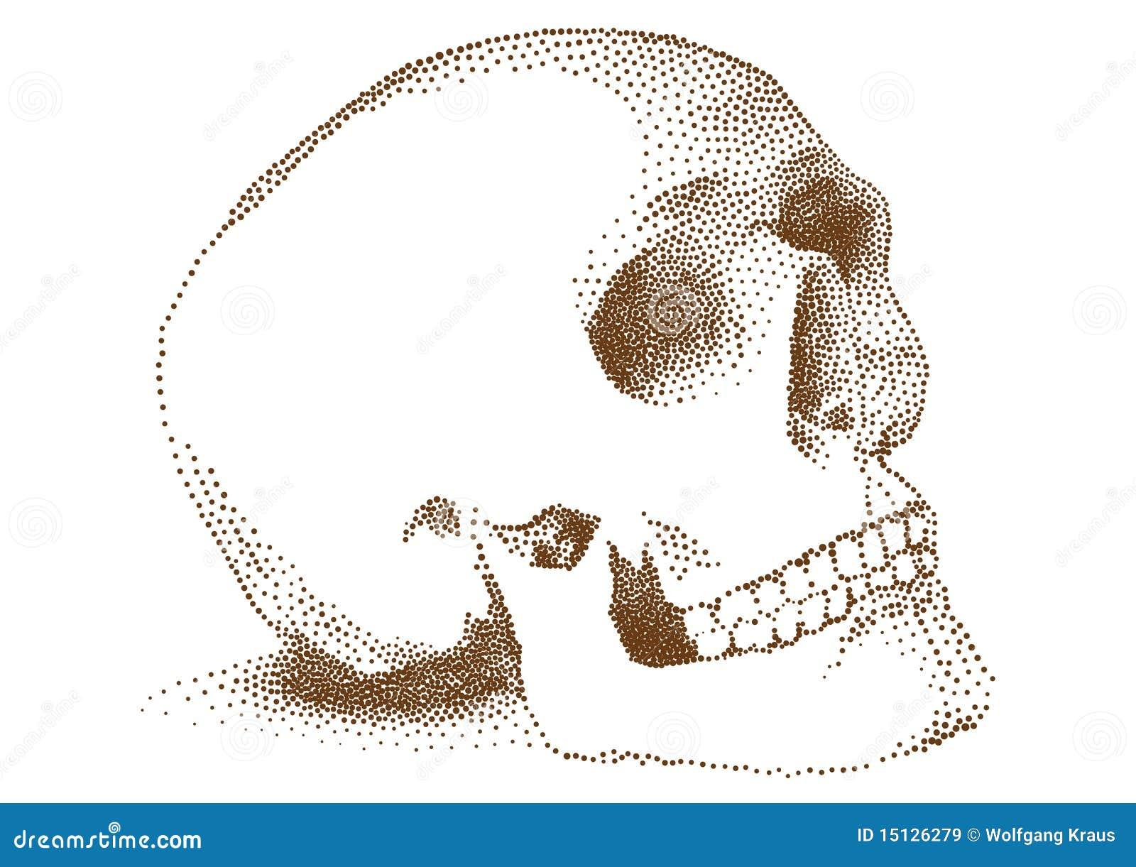 Menselijke schedel,
