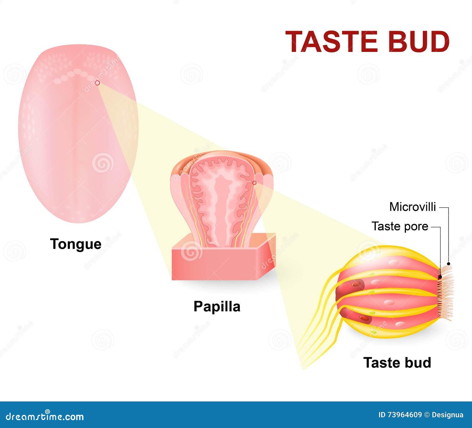 Tong in het oor dating