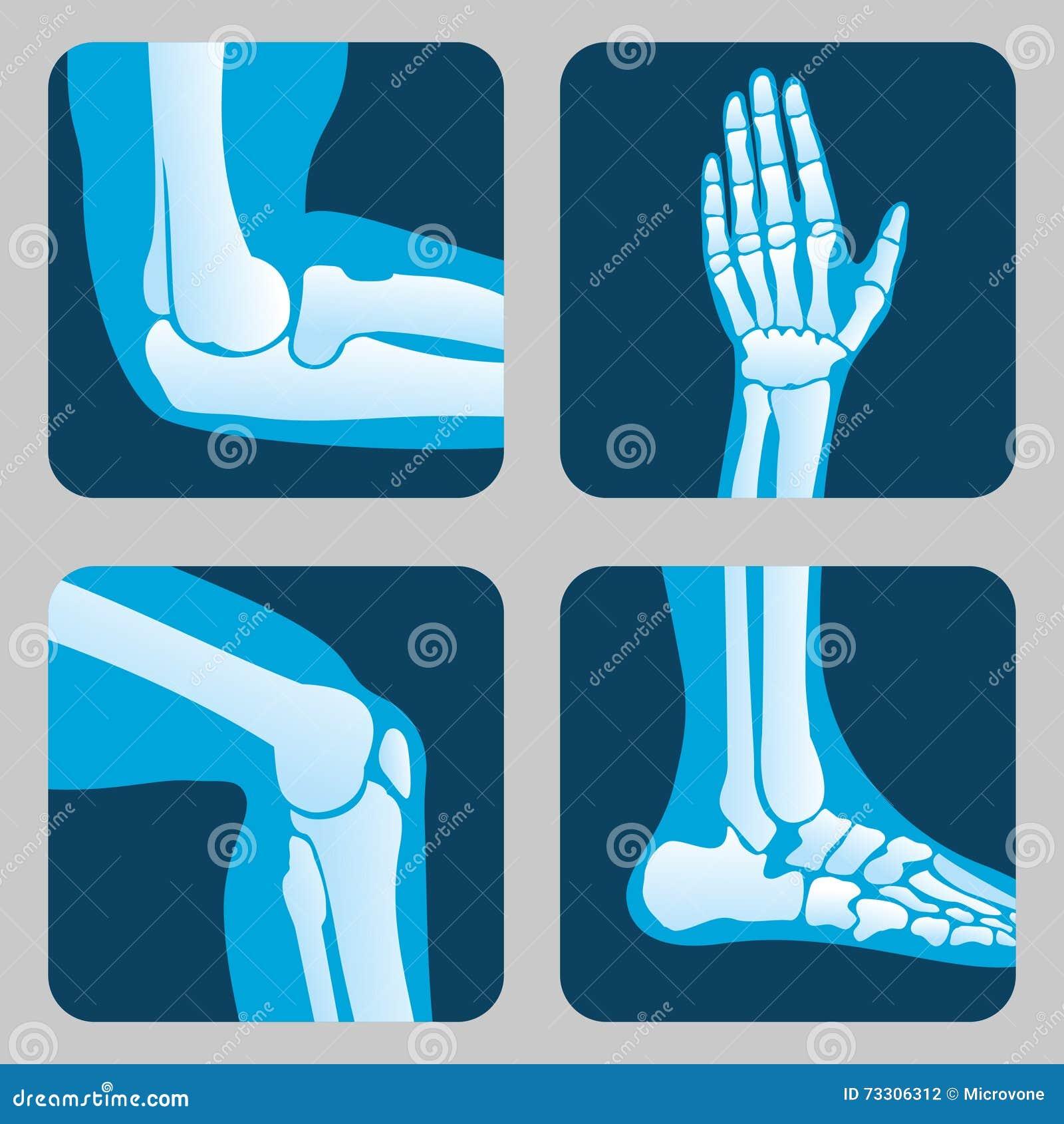 Menselijke Verbindingen Knie En Elleboog De Medische