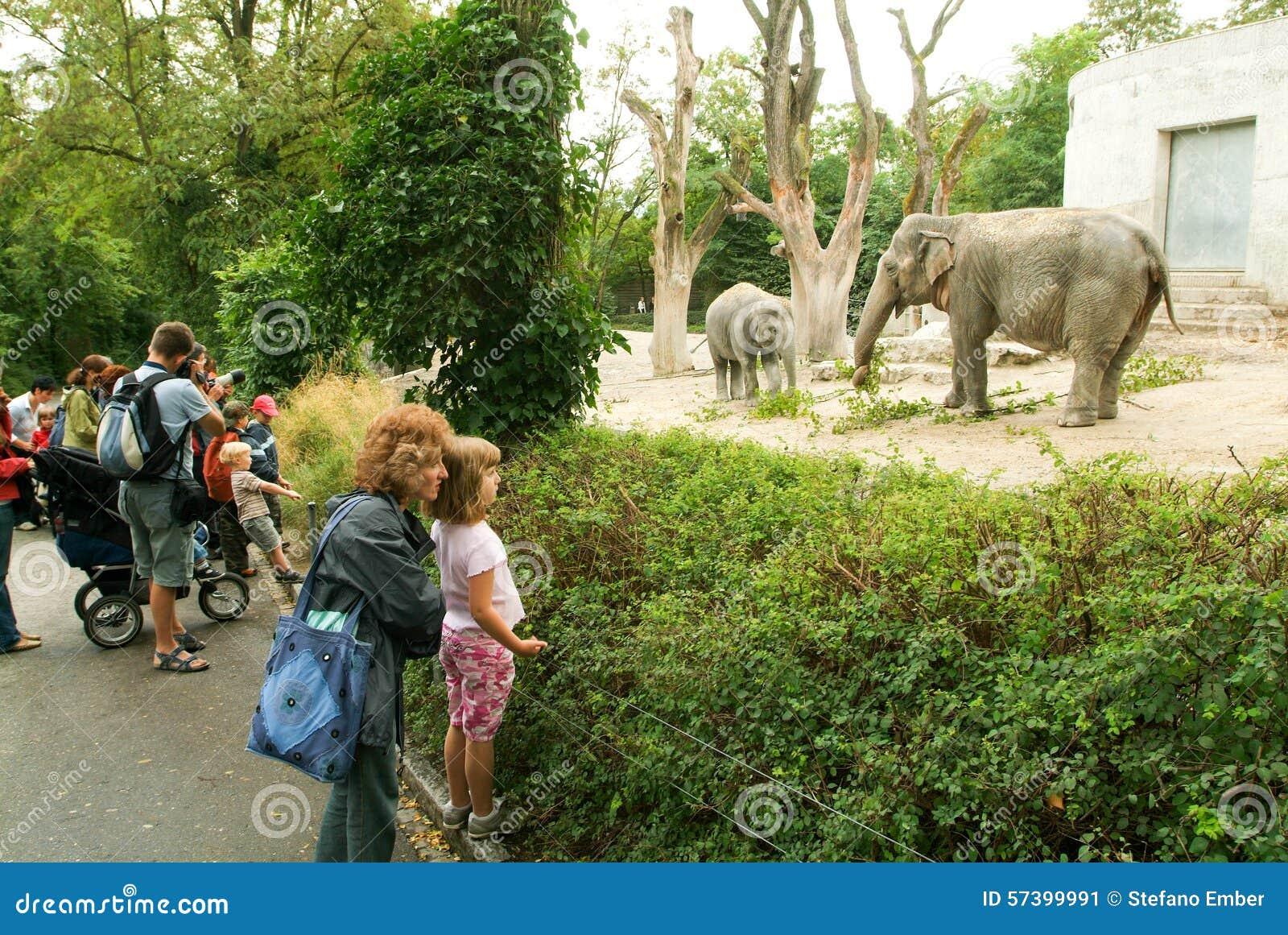 Mensen die de olifanten in de Dierentuin Zürich waarnemen