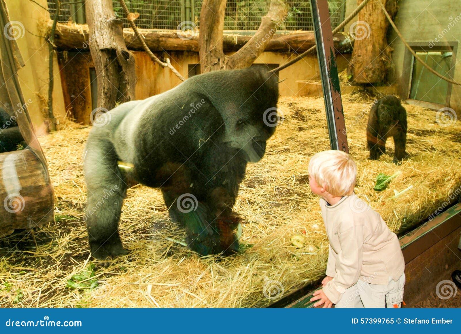 Mensen die gorilla s in de Dierentuin Zürich op Zwitserland waarnemen