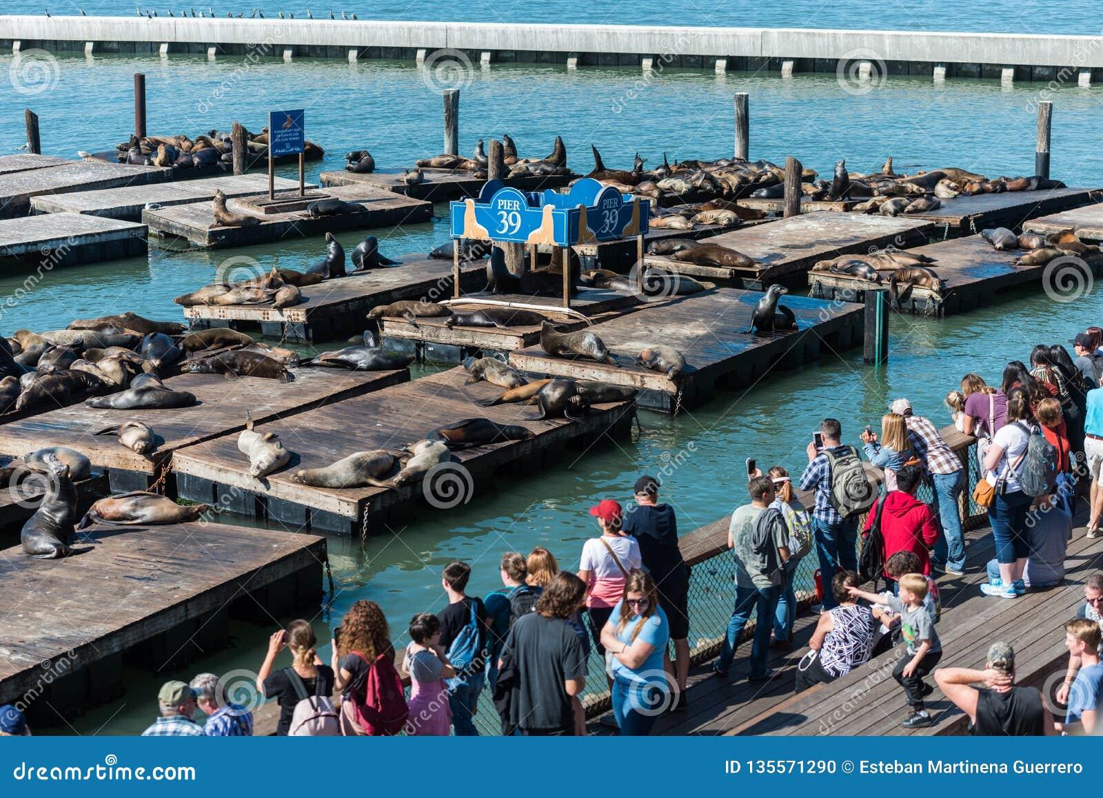 Mensen die op de zeeleeuwen letten bij Pijler 39 in San Francisco, Californië, de V.S.