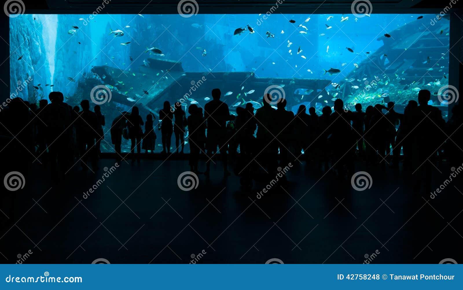 Mensen Die Voor Grote Aquarium Mariene Tank Weggaan Stock Foto   Afbeelding  42758248