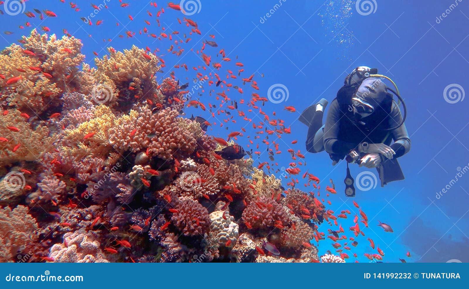 Mensenscuba-duiker die mooi kleurrijk tropisch koraalrif bewonderen
