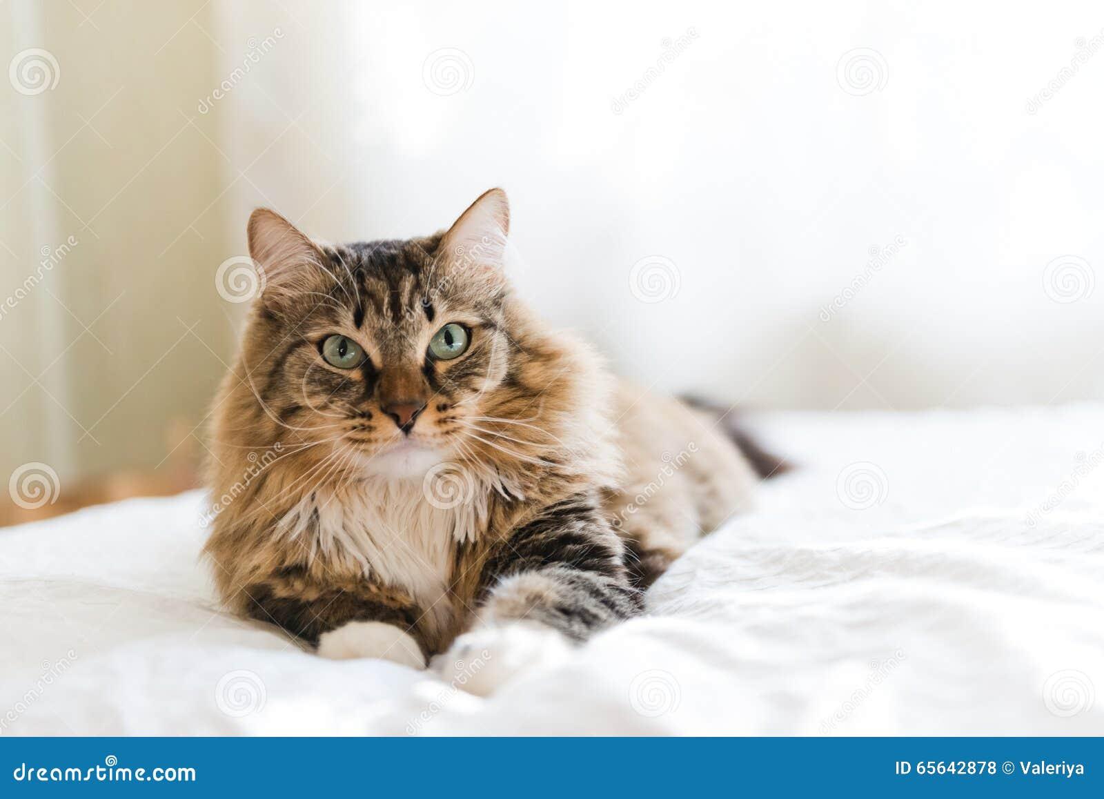 Mensonge gris de chat