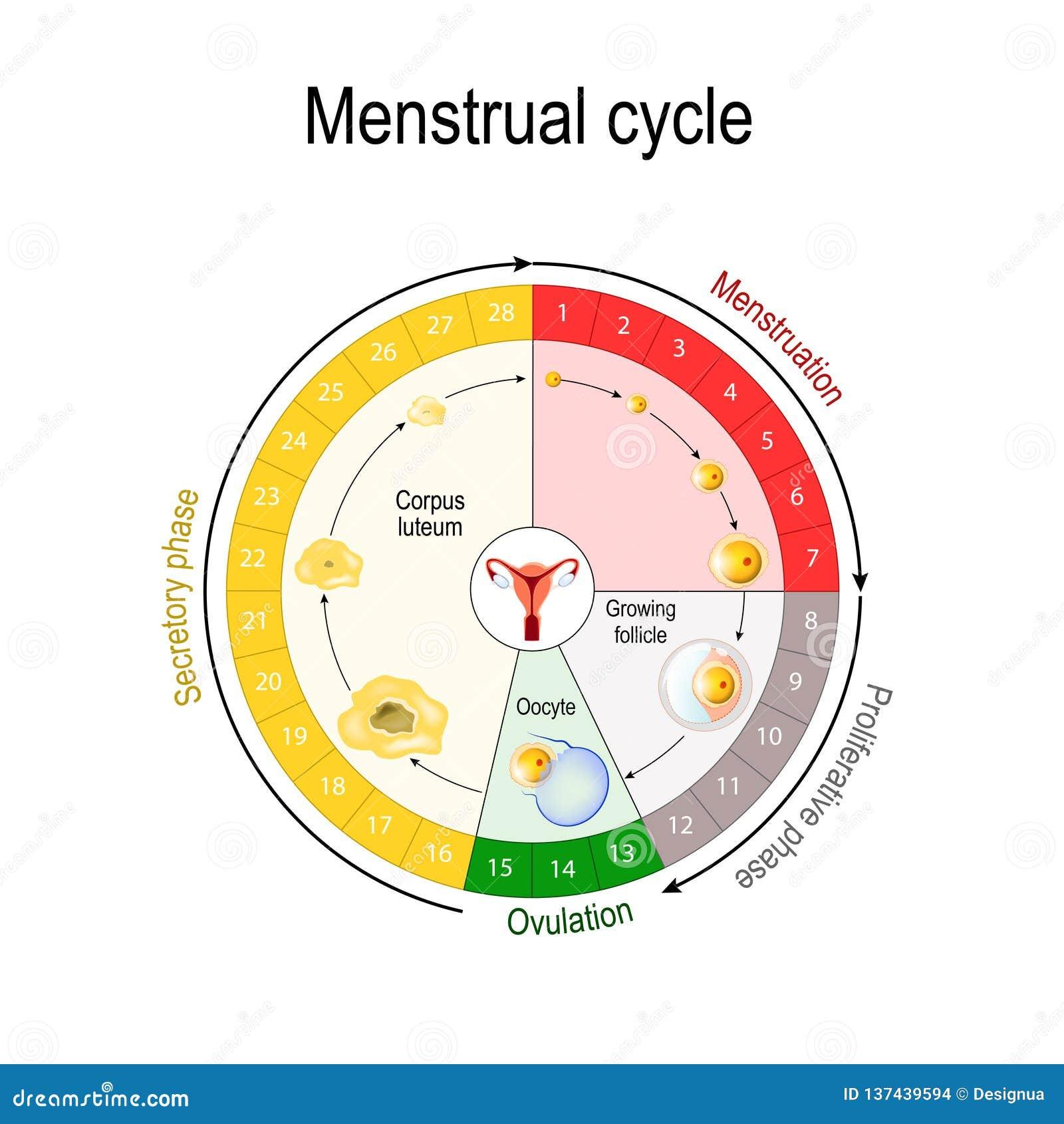 Menstrual Cartoons, Illustrations & Vector Stock Images ... Menstrual Cycle Calendar Graph