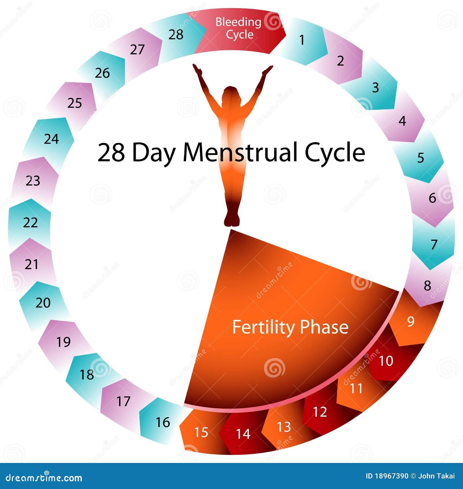 Menstrual diagramcirkuleringsfertilitet