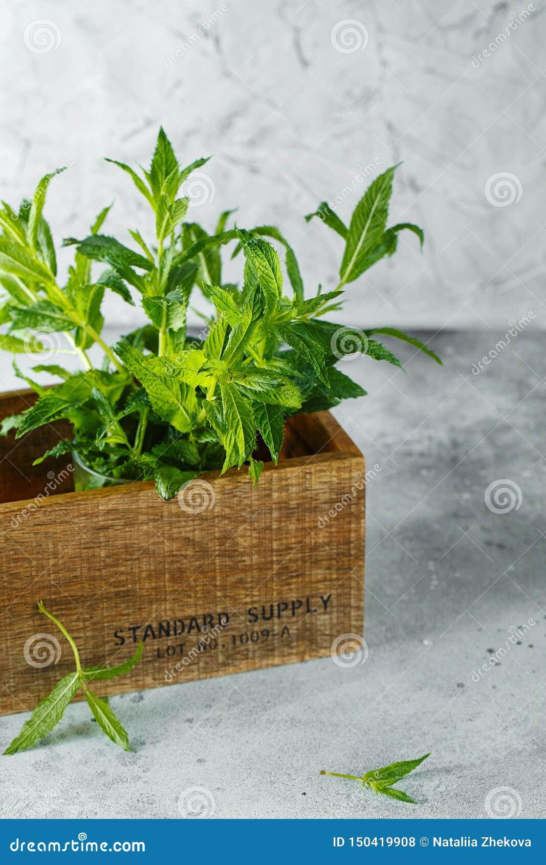 Planter Dans Une Caisse En Bois menthe verte dans la caisse sur le backfround gris fin en