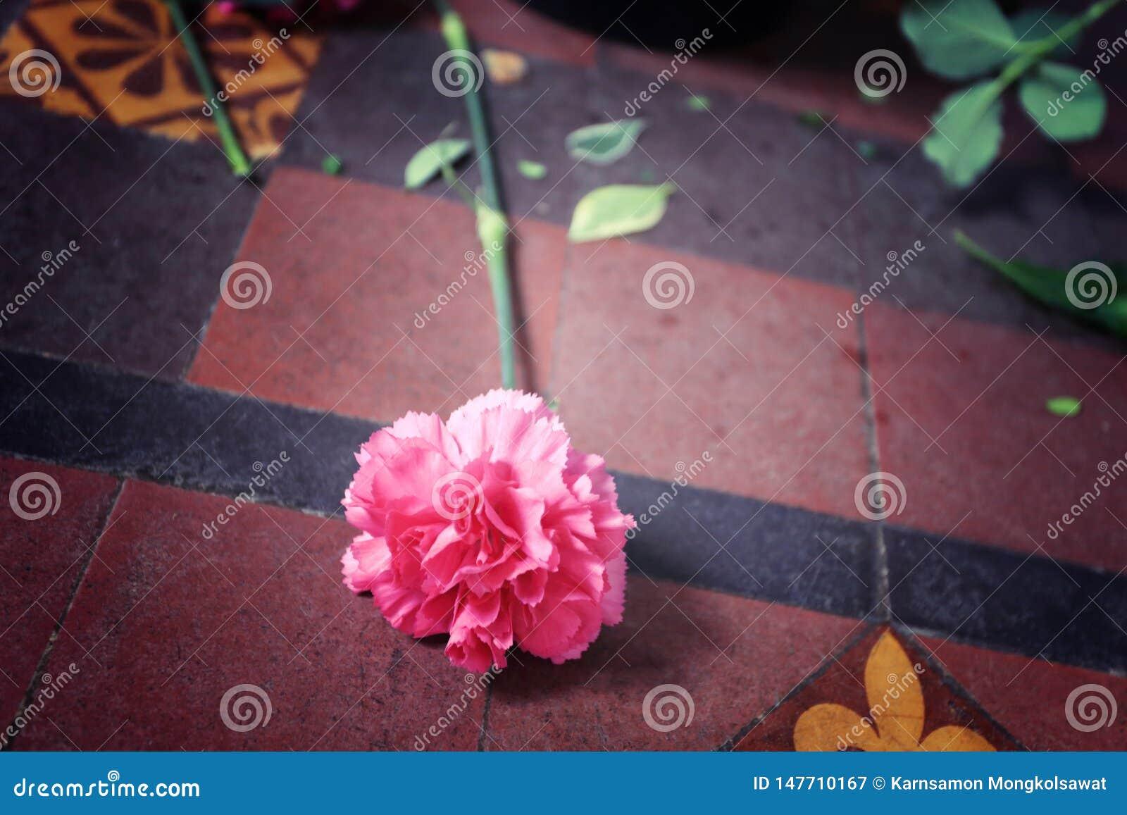 Mentira rosada en el piso, proceso de la flor del clavel como imagen del estilo del vintage para el símbolo de abandonado o de ab