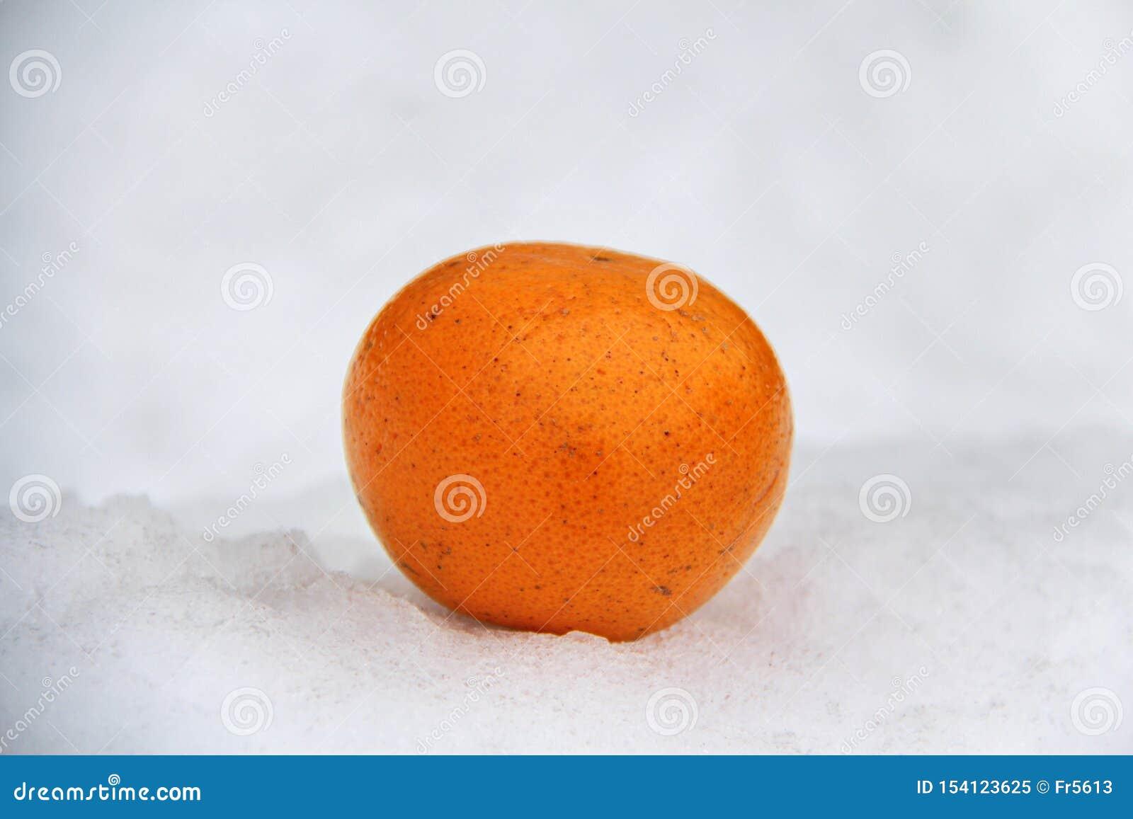 Mentiras alaranjadas laranja-vermelhos na neve de derretimento fraca branca