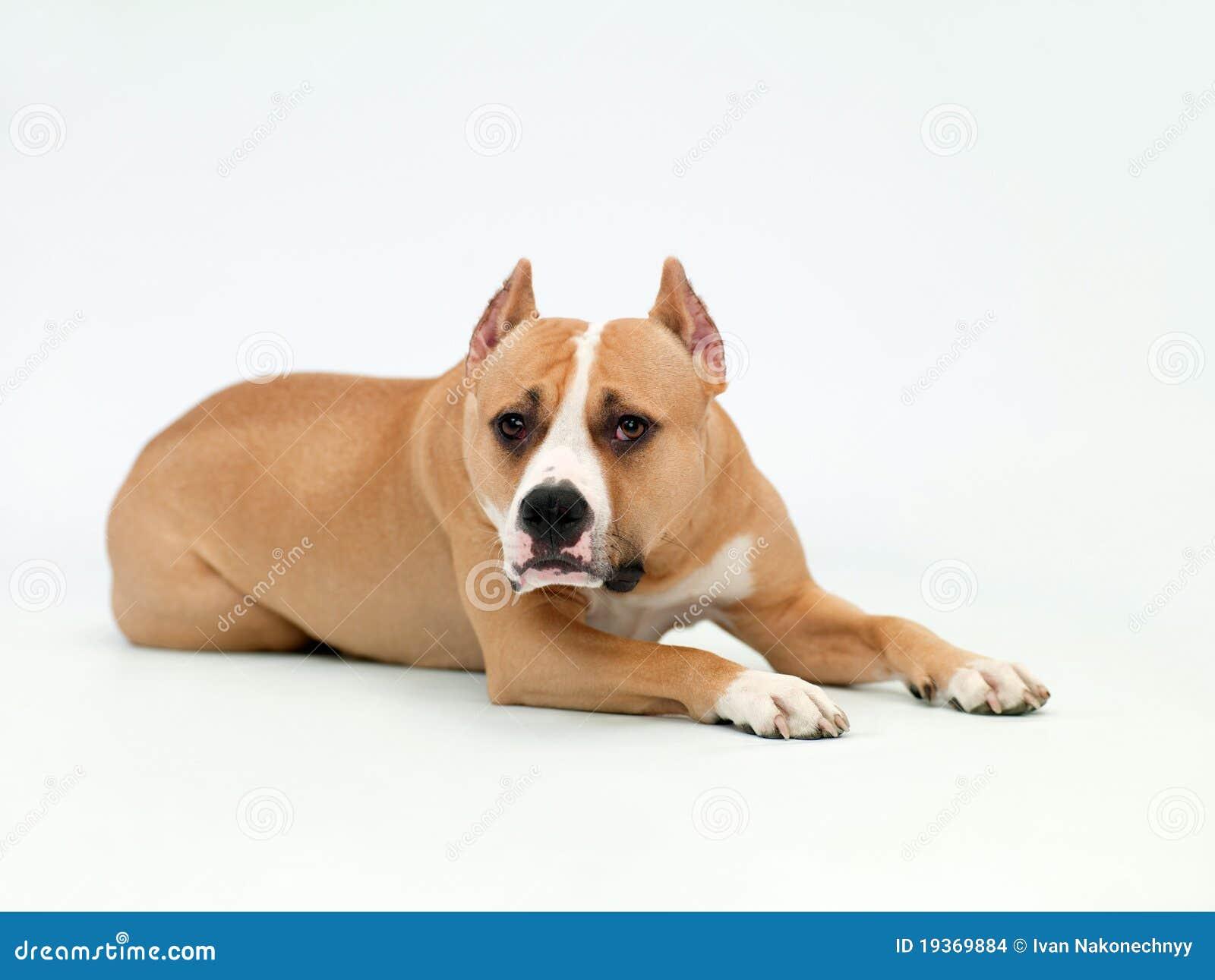 Mentiras do cão